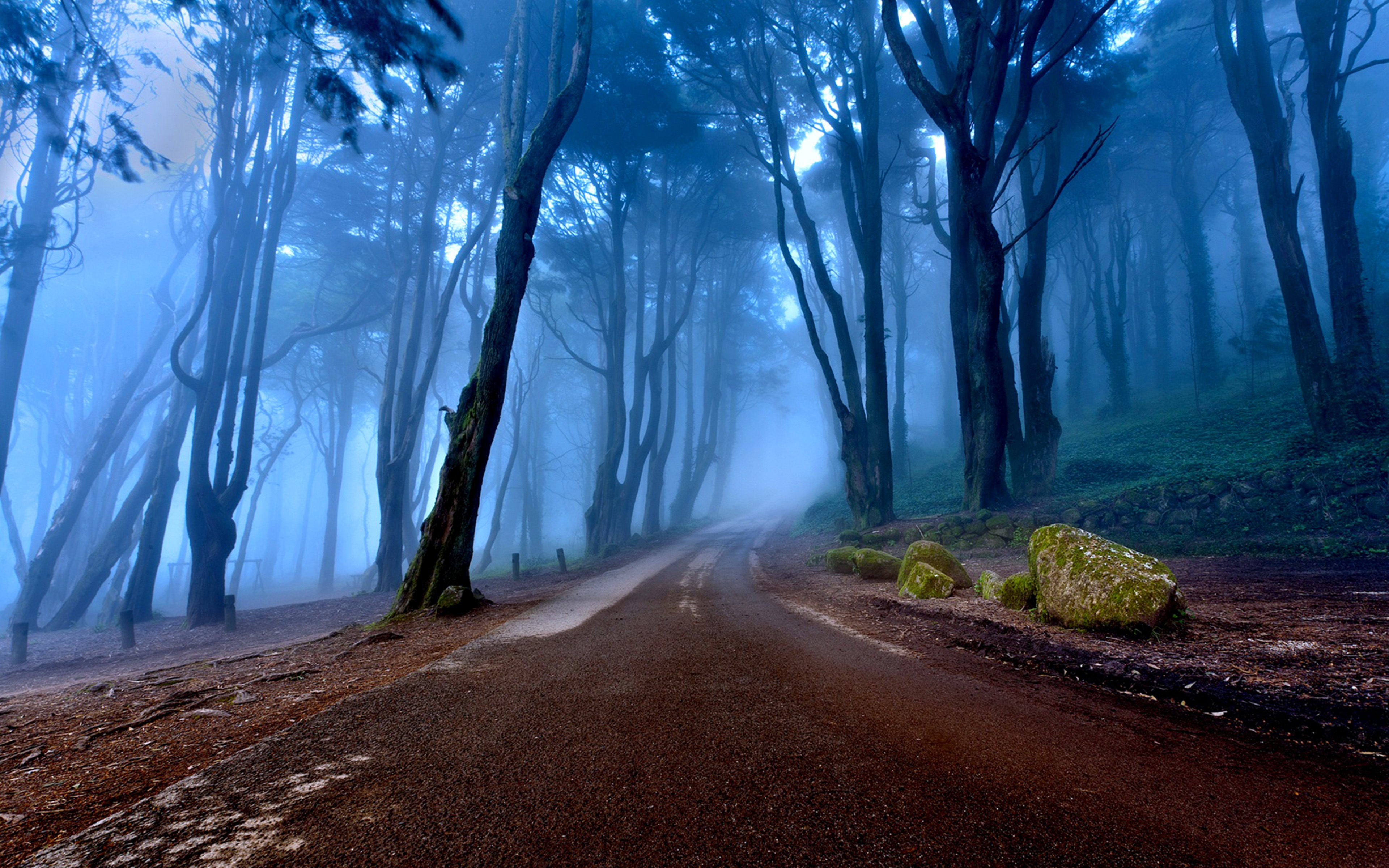 Paisajes Wallpapers Full Hd Landscapes Of Portugal Autumn Road Forest With Tall Trees