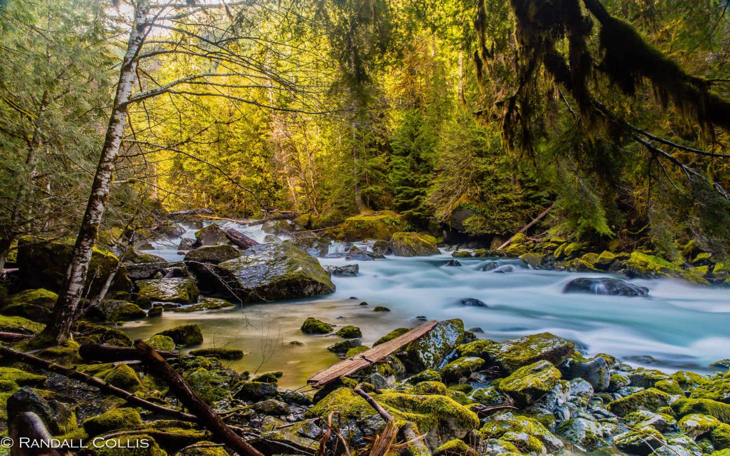 Clear Wallpaper Iphone X Mountain River North Fork Skokomish River Olympic National