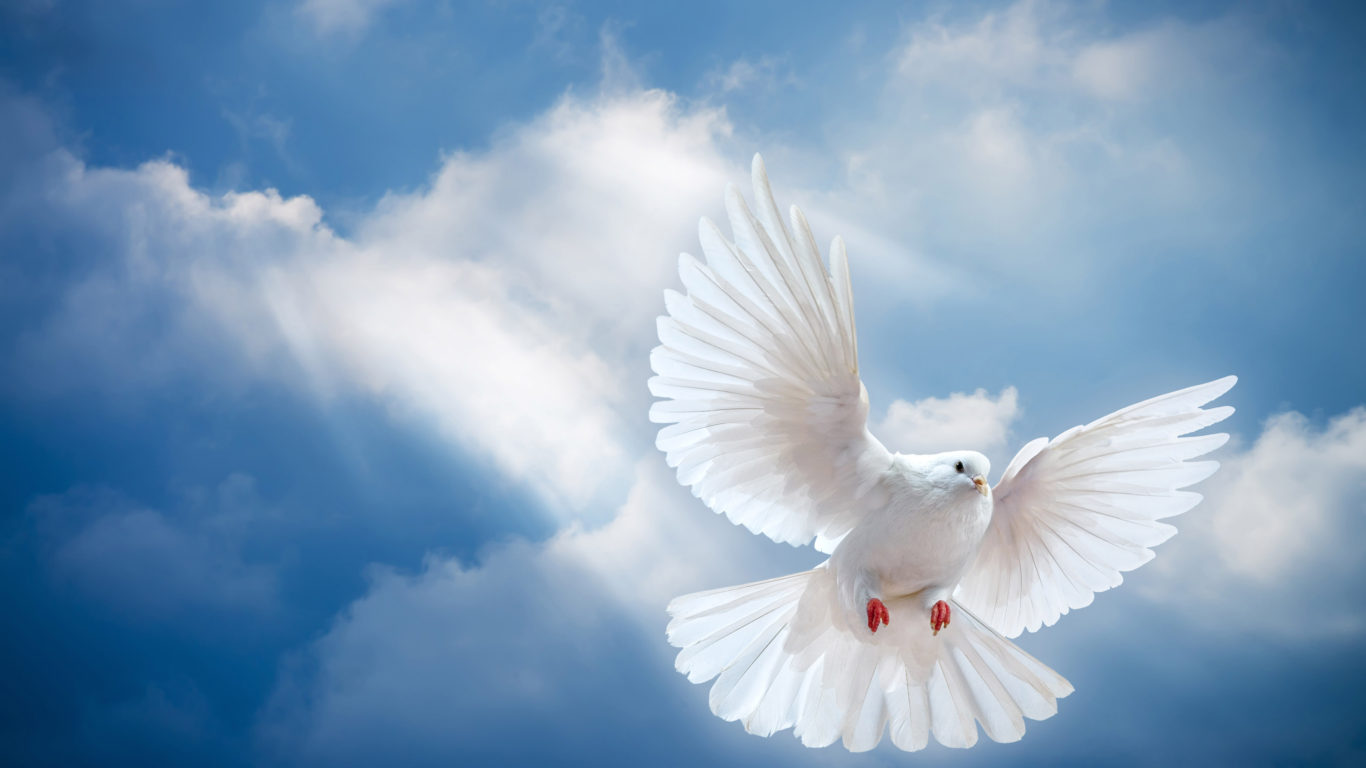 Hd Pigeon Wallpaper Pigeon White Blue Sky And White Clouds Hd Wallpapers For