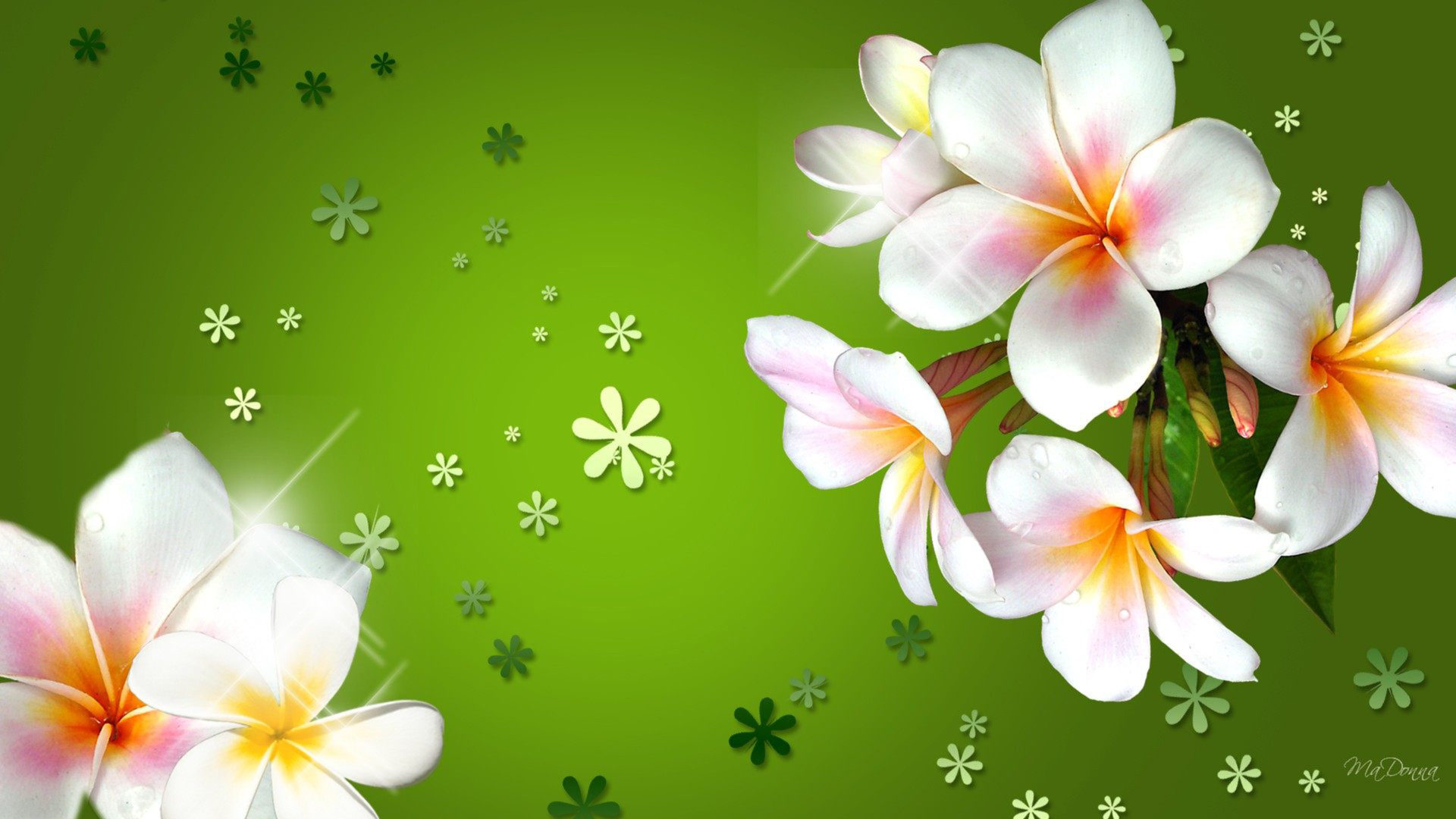 3d Sunflower Wallpaper Plumeria Three Colored Flowers With Bright Green
