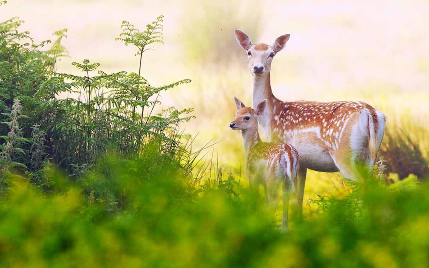 Cute Pet Animals Wallpapers Red Deer Family Hd Wallpaper Wallpapers13 Com