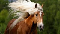 Hd Animals Wallpapers Wild Horses Wallpapers