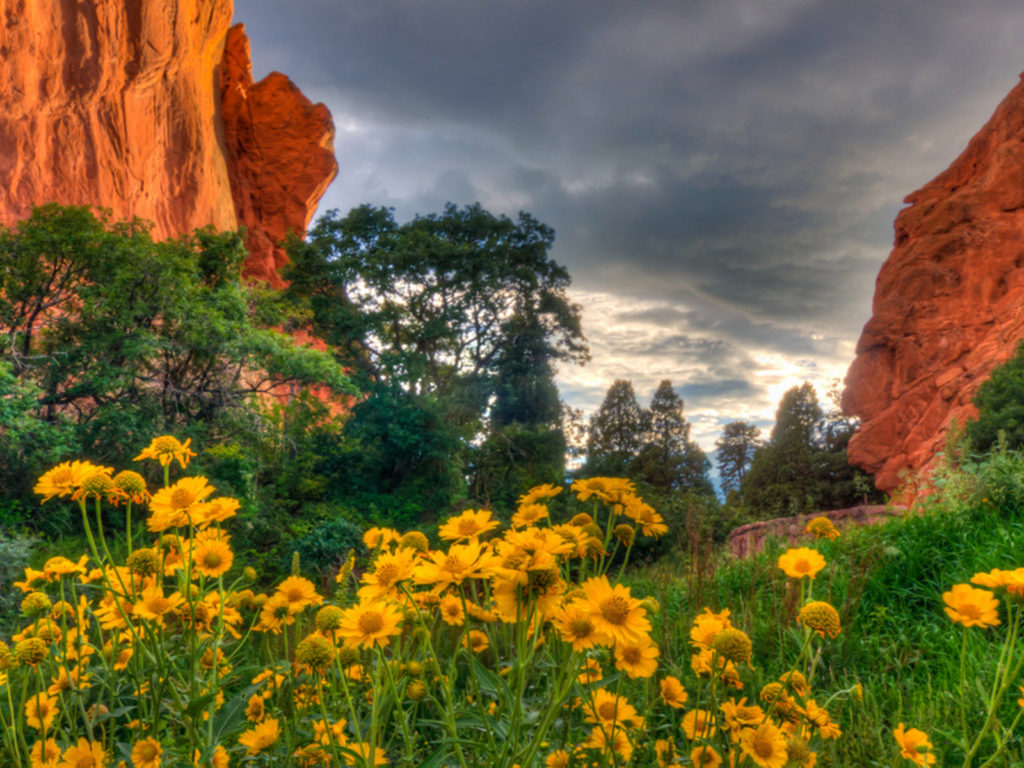 Sunrise Wallpaper Iphone 6 Spring Flowers In The Garden Of The Gods In Colorado