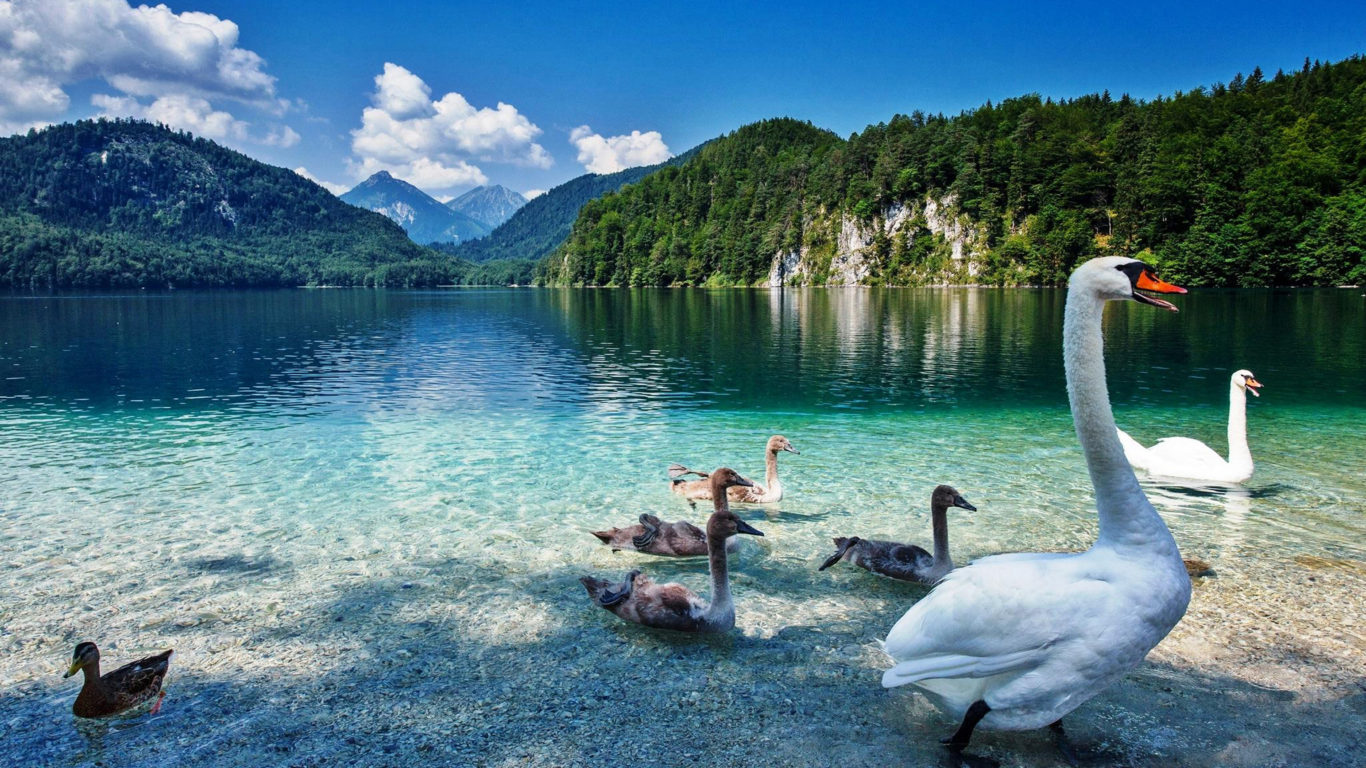 Fall 2016 Wallpaper Swan Lake With Crystal Clear Water Priroda Planini Green