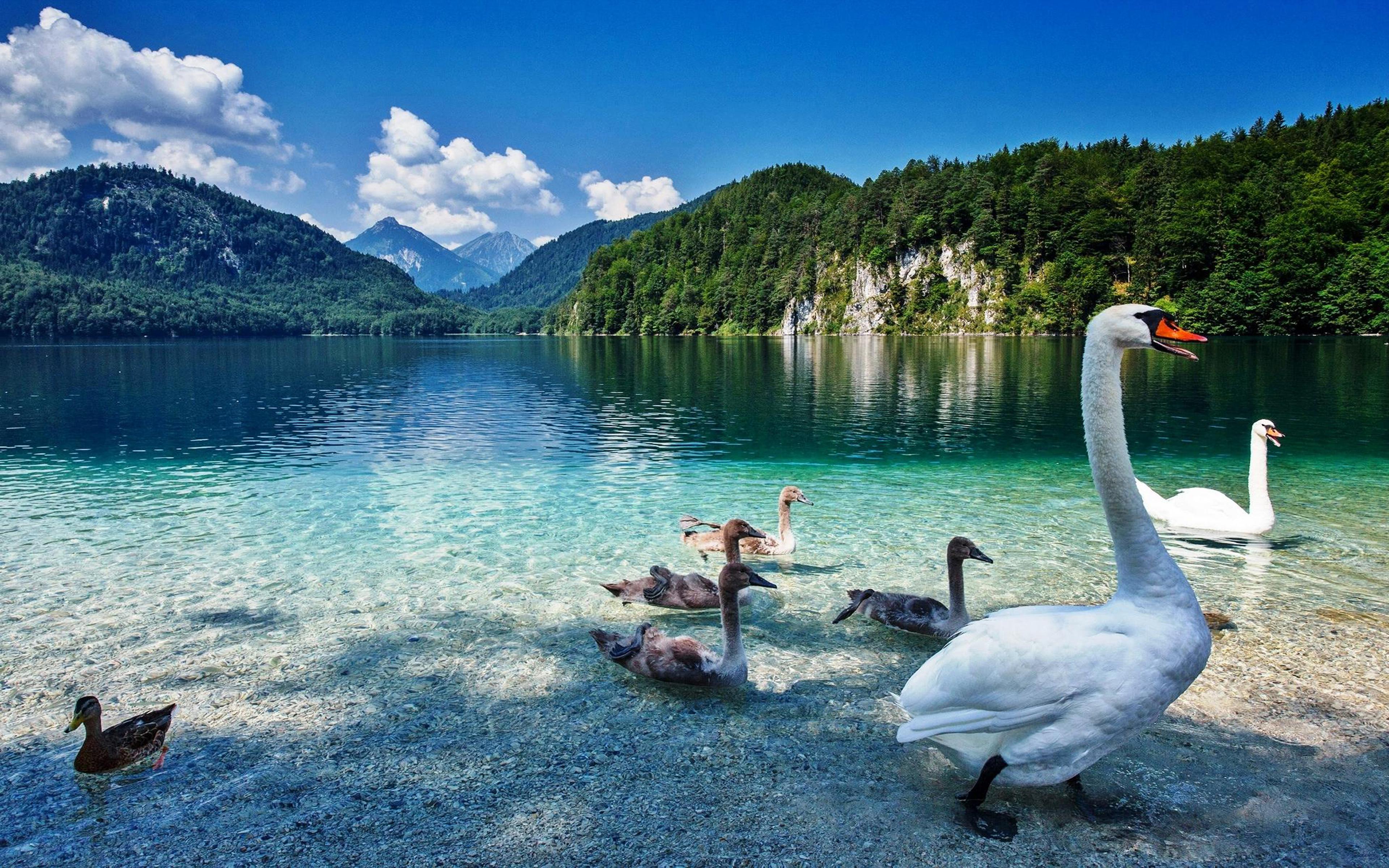 Fall Church Pictures Free Wallpaper Swan Lake With Crystal Clear Water Priroda Planini Green