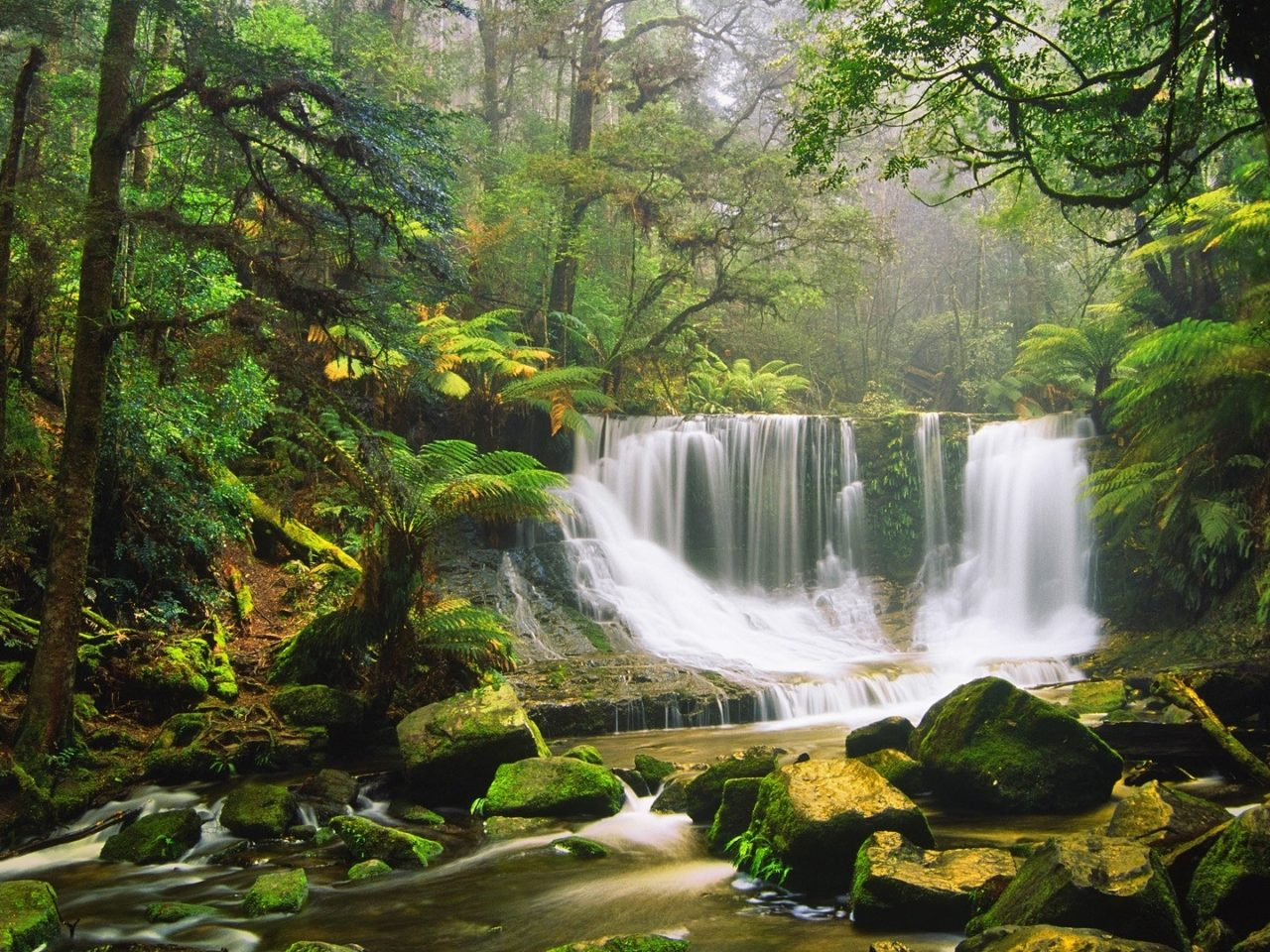 Rain Fall On Flowers Wallpaper Waterfall Rocks Moss Green Forest Tree Fern Australian