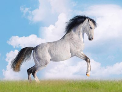 White Horse Desktop Wallpapers HD free download for windows : Wallpapers13.com