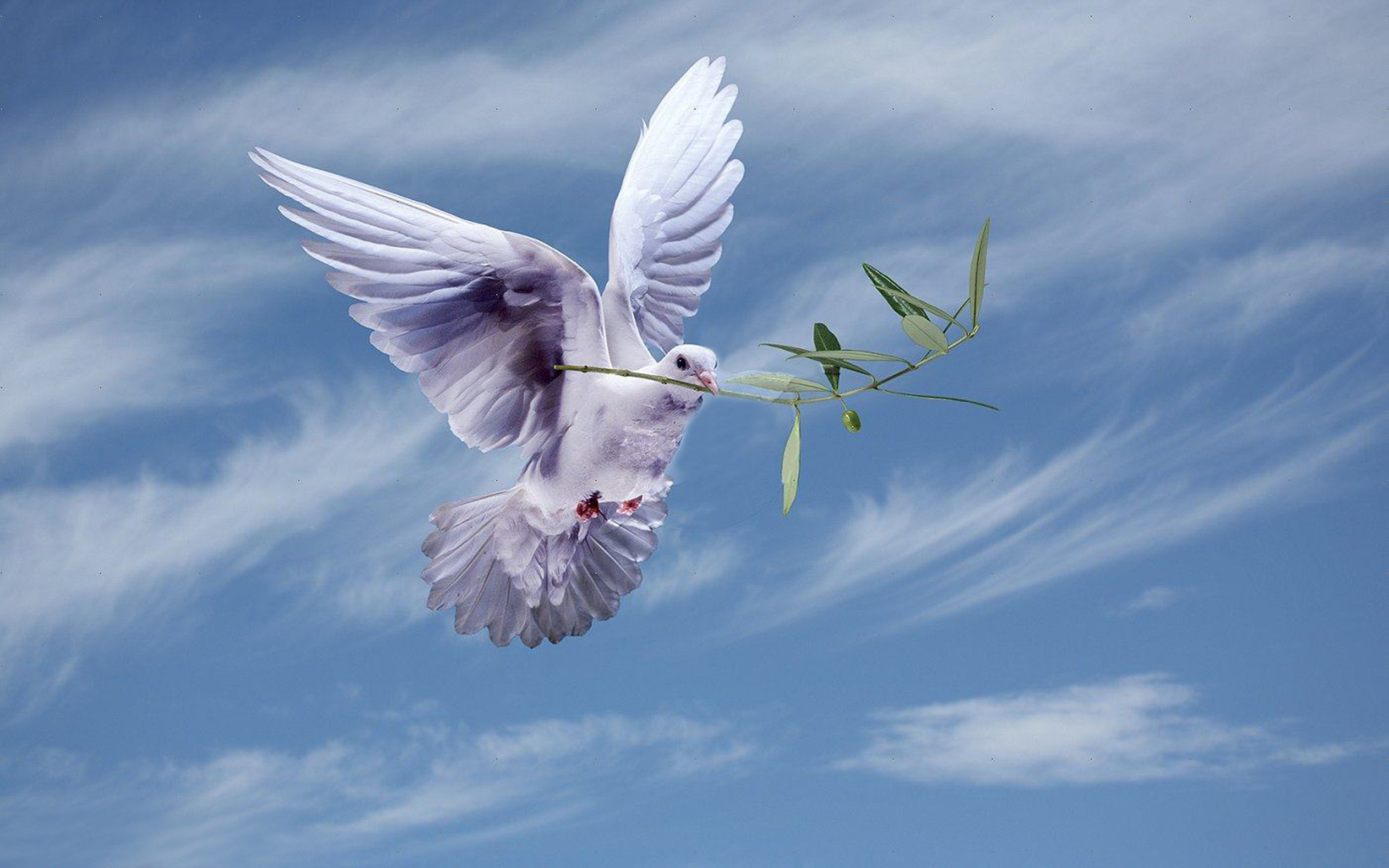 Animated Fish Wallpaper Hd White Dove With An Olive Branch Symbol Of Peace Hd