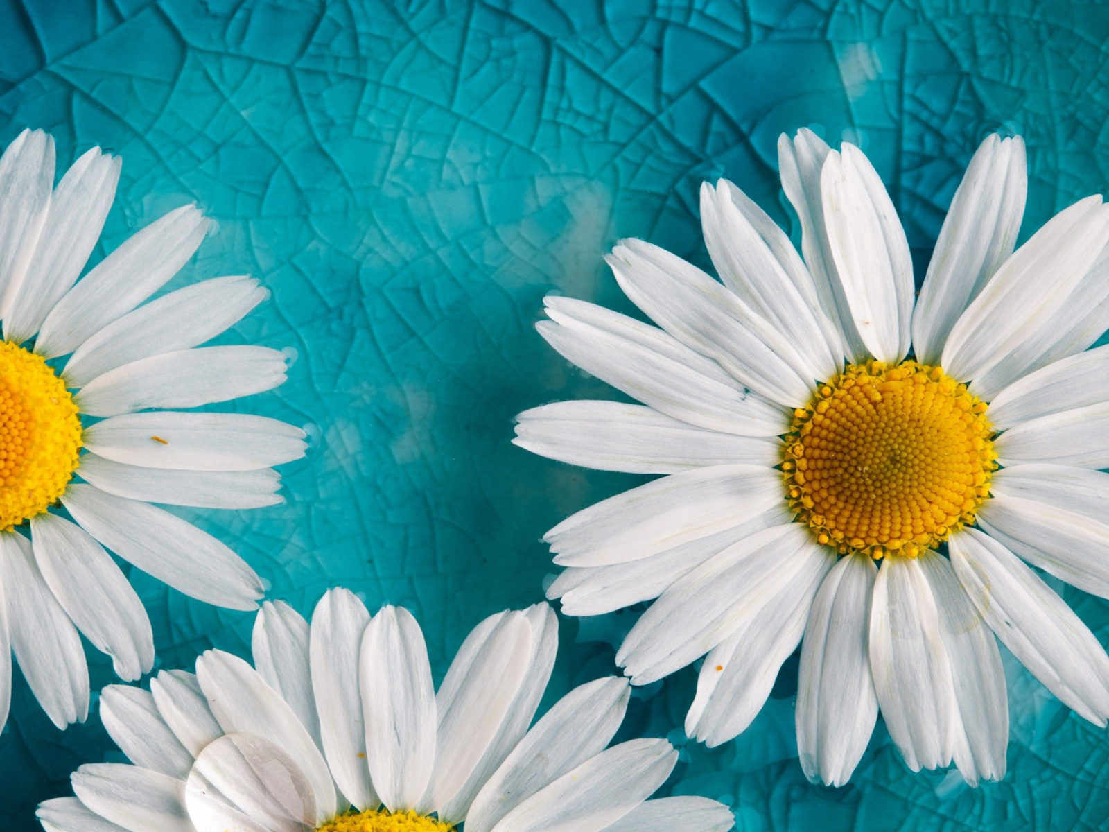 Iphone X Cracked Screen Wallpaper Yellow White Flowers Blue Cracked Glass Hd Wallpaper