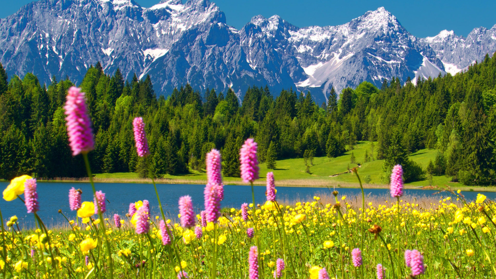 Majestic Fall Wallpaper Alps Snowy Mountain Peaks Blue Sky Green Forest With Trees