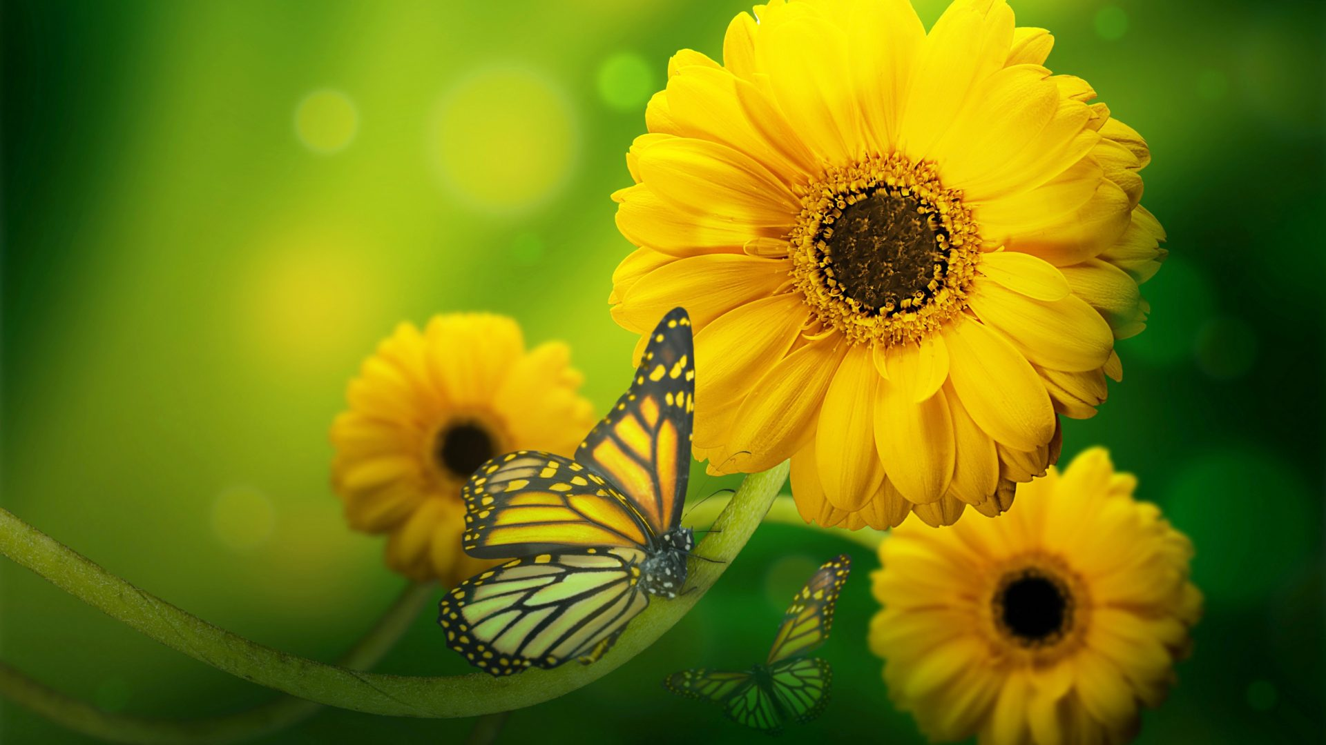 Fall Computer Screen Wallpaper Butterfly On Yellow Flowers Hd Wallpaper Download For