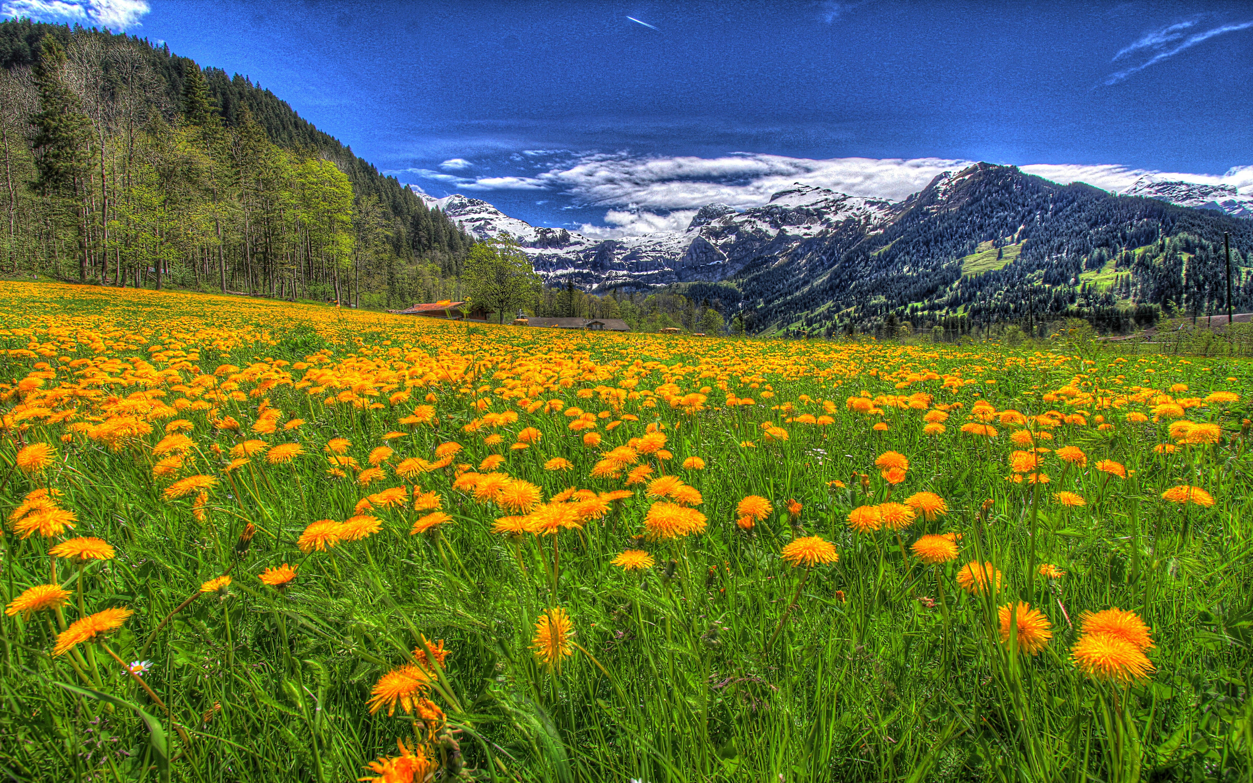 Iphone Wallpaper Cloud Landscape Nature Meadow With Yellow Flowers Of Dandelion