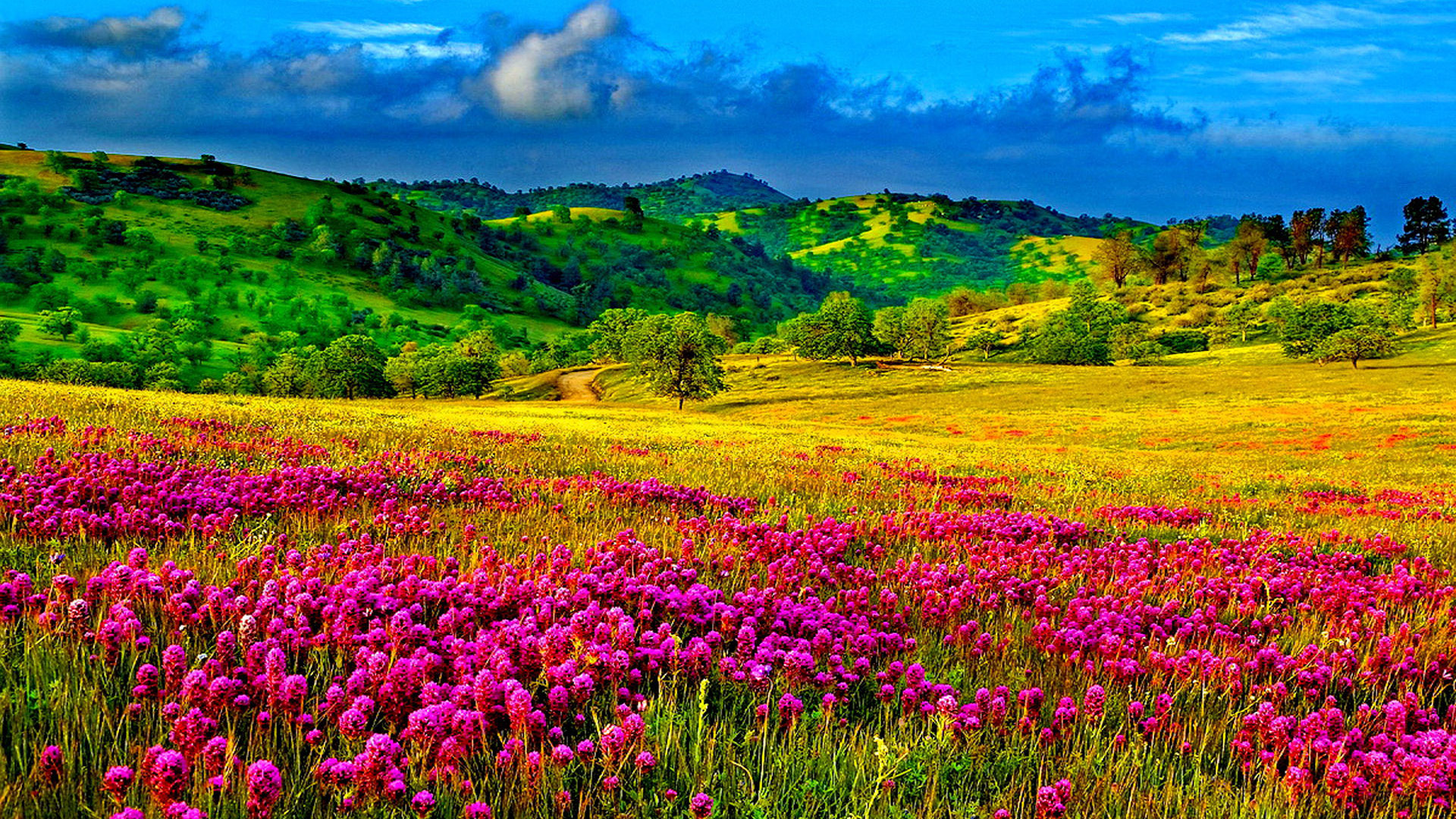 Fall Flowers Desktop Background Wallpaper Meadow With Purple Flowers Hills With Trees And Green