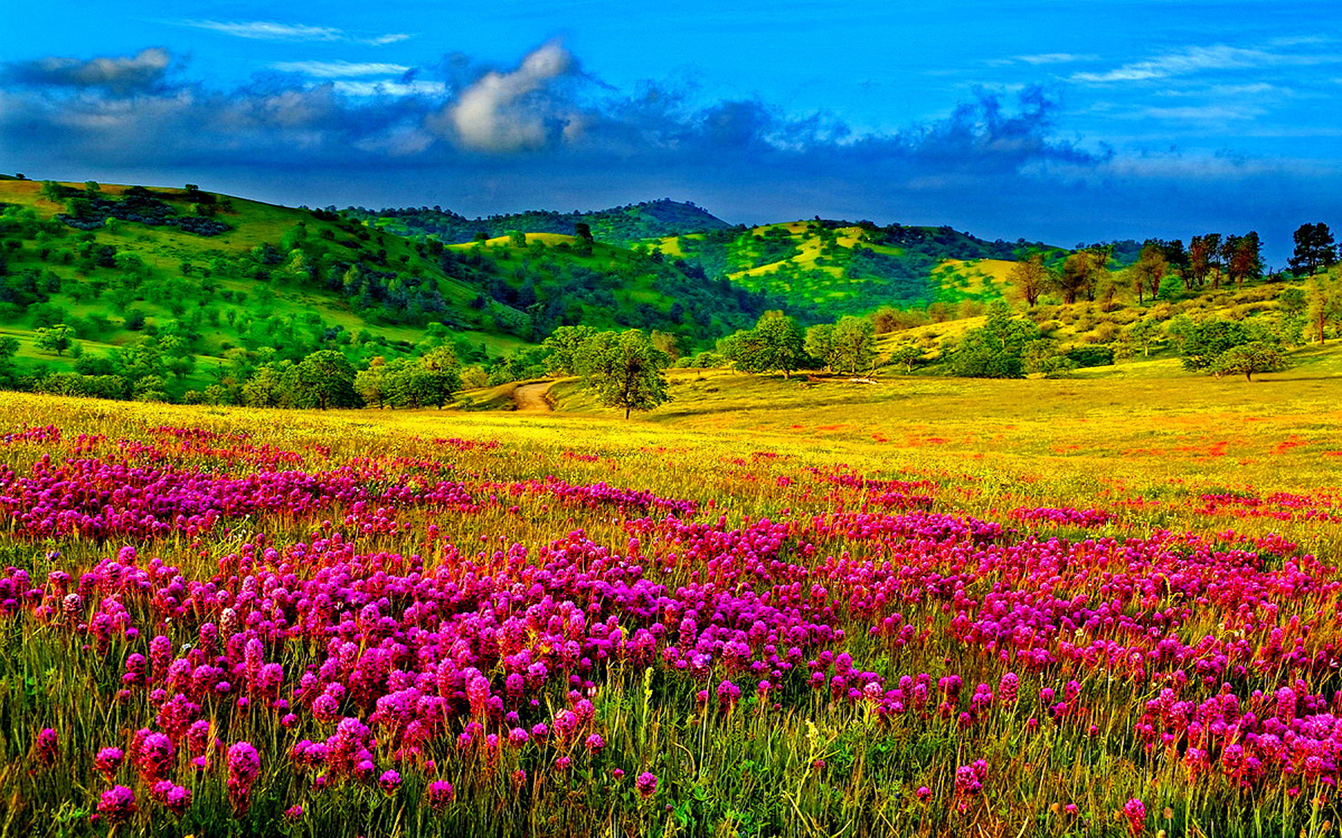 Large Fall Desktop Wallpaper Meadow With Purple Flowers Hills With Trees And Green
