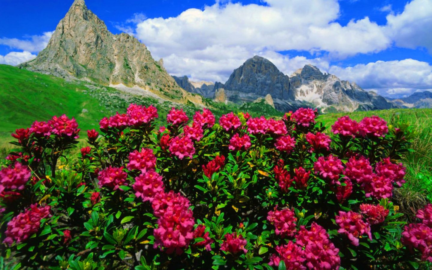 Old Wallpaper Iphone X Mountain Flowers Pink Roses And Green Meadows With Grass