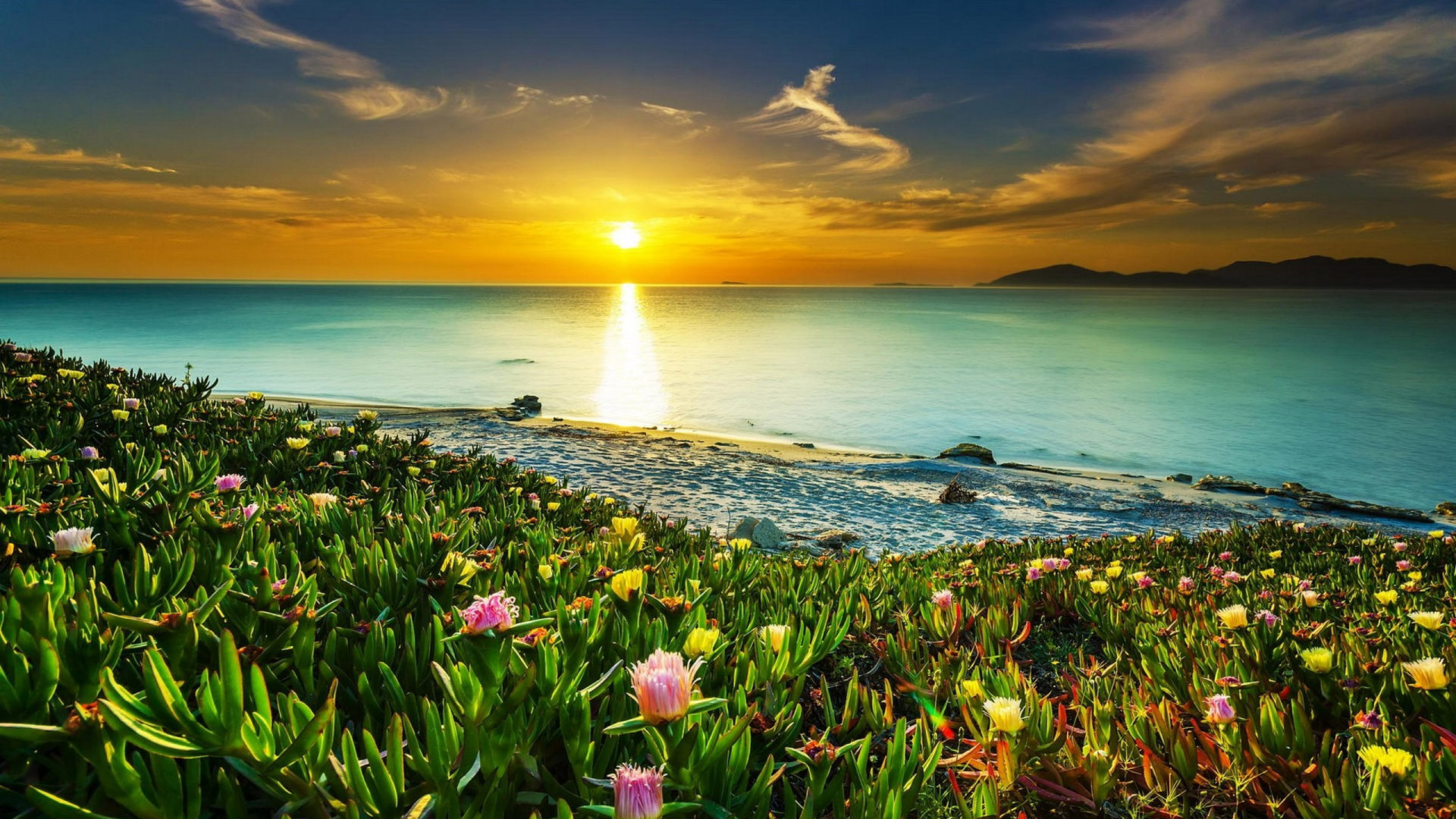 Fall Wallpapers For Tablet Sea Coast Meadow With Tropical Flowers Sandy Beach Calm