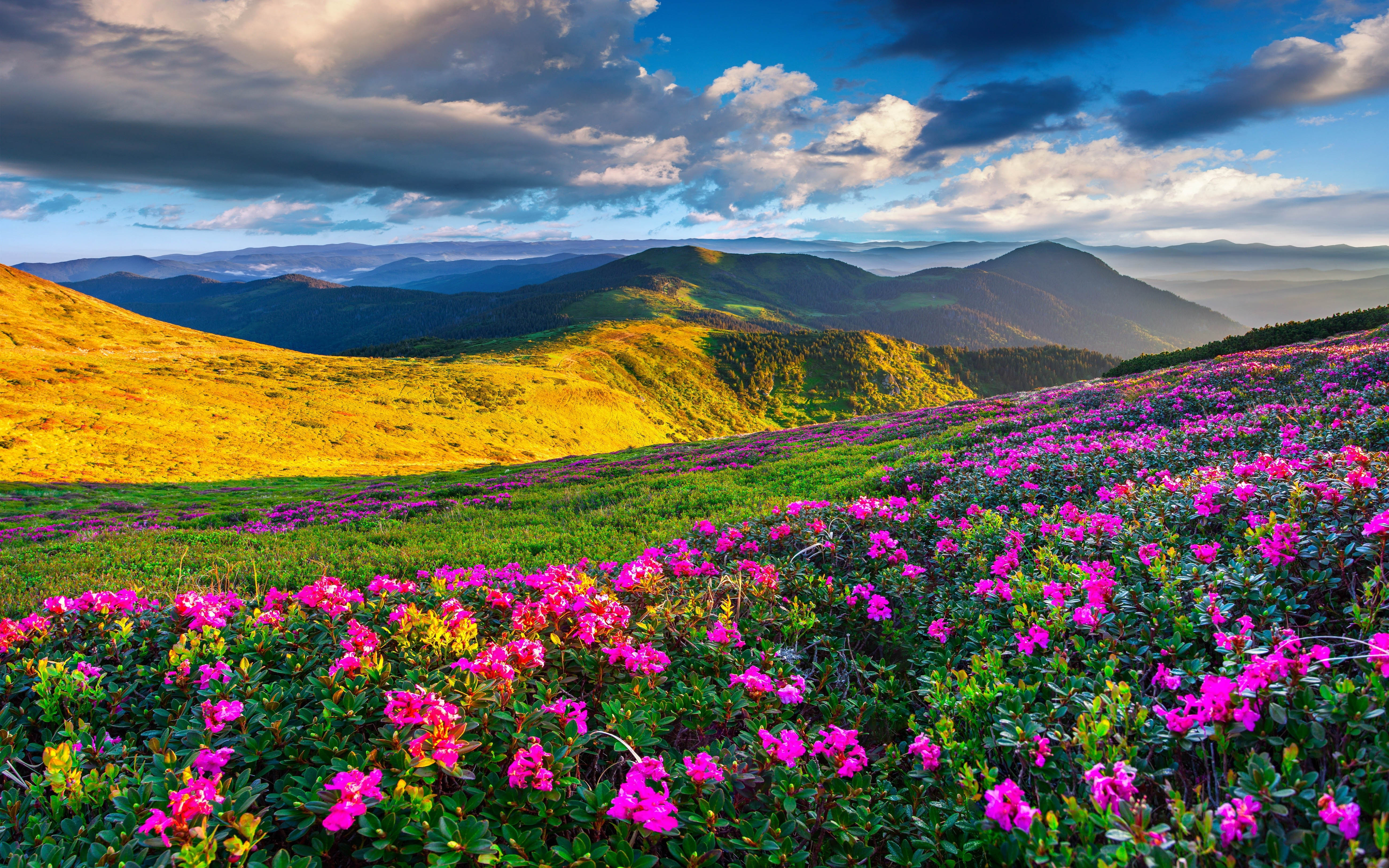 Free Fall Foliage Wallpaper Spring Mountain Landscape Flowers Purple Colored Hills