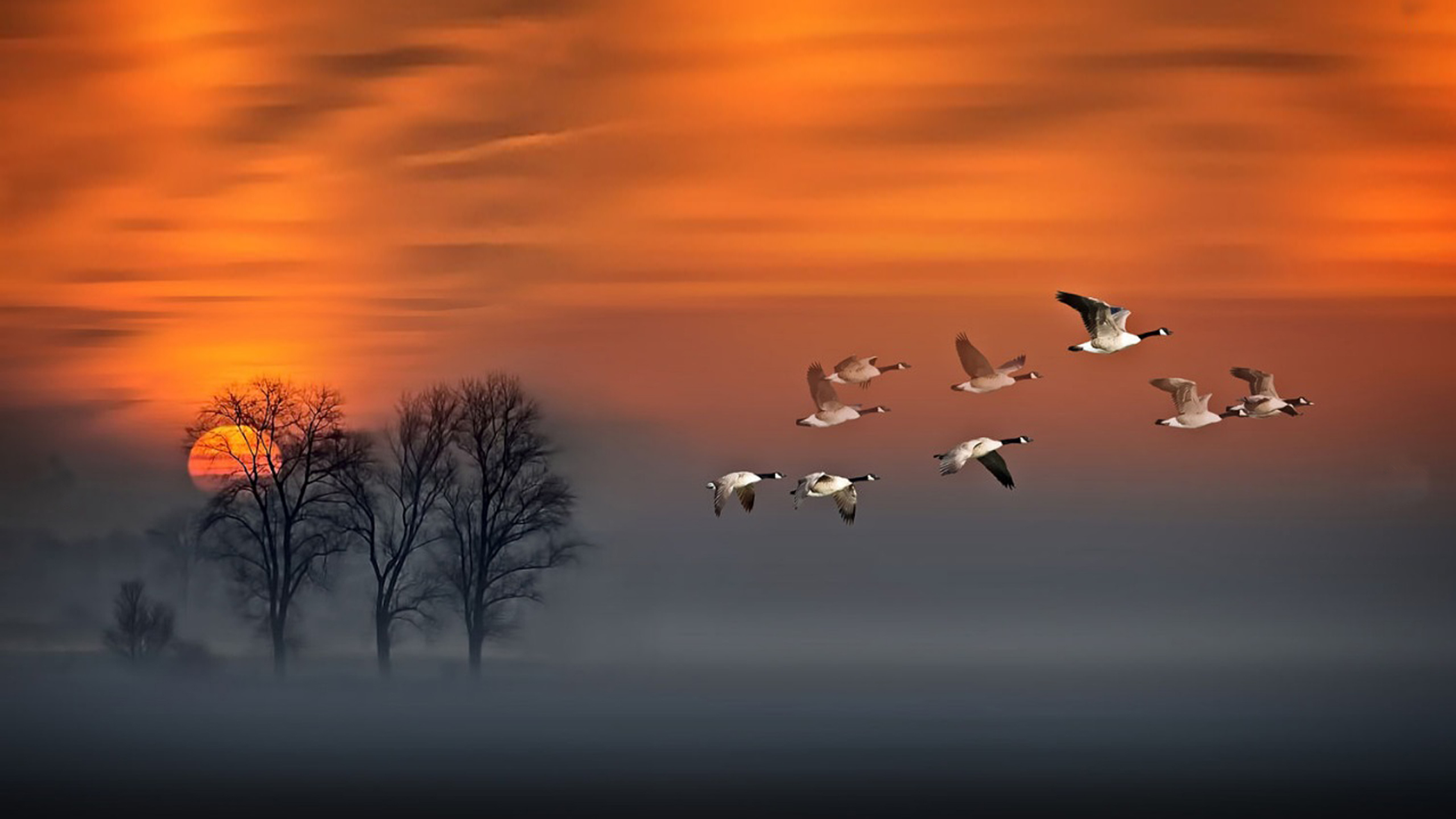 Free Full Screen Fall Wallpaper Flight Sunset Geese In Flight Fog Wood Red Sky Art Hd