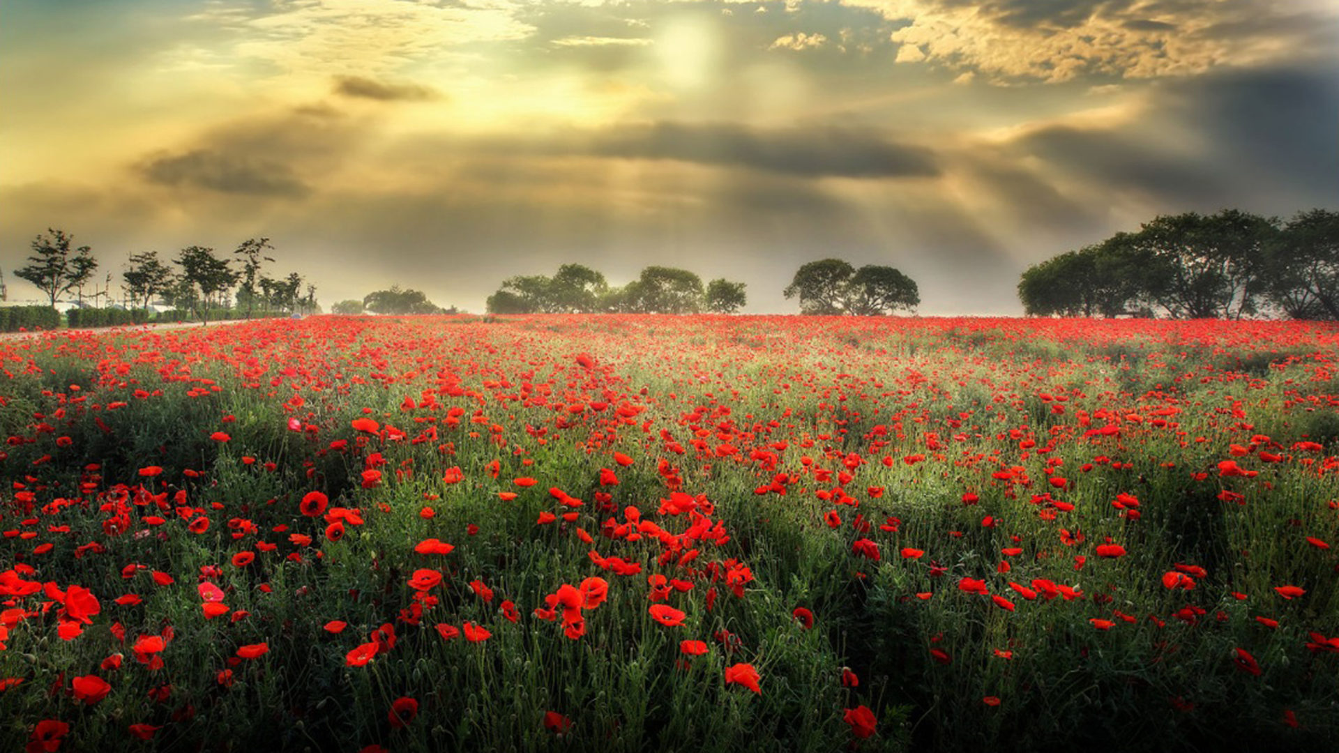 Poppy Wallpaper For Iphone Meadow With Red Poppies Dark Black Clouds Sun Rays