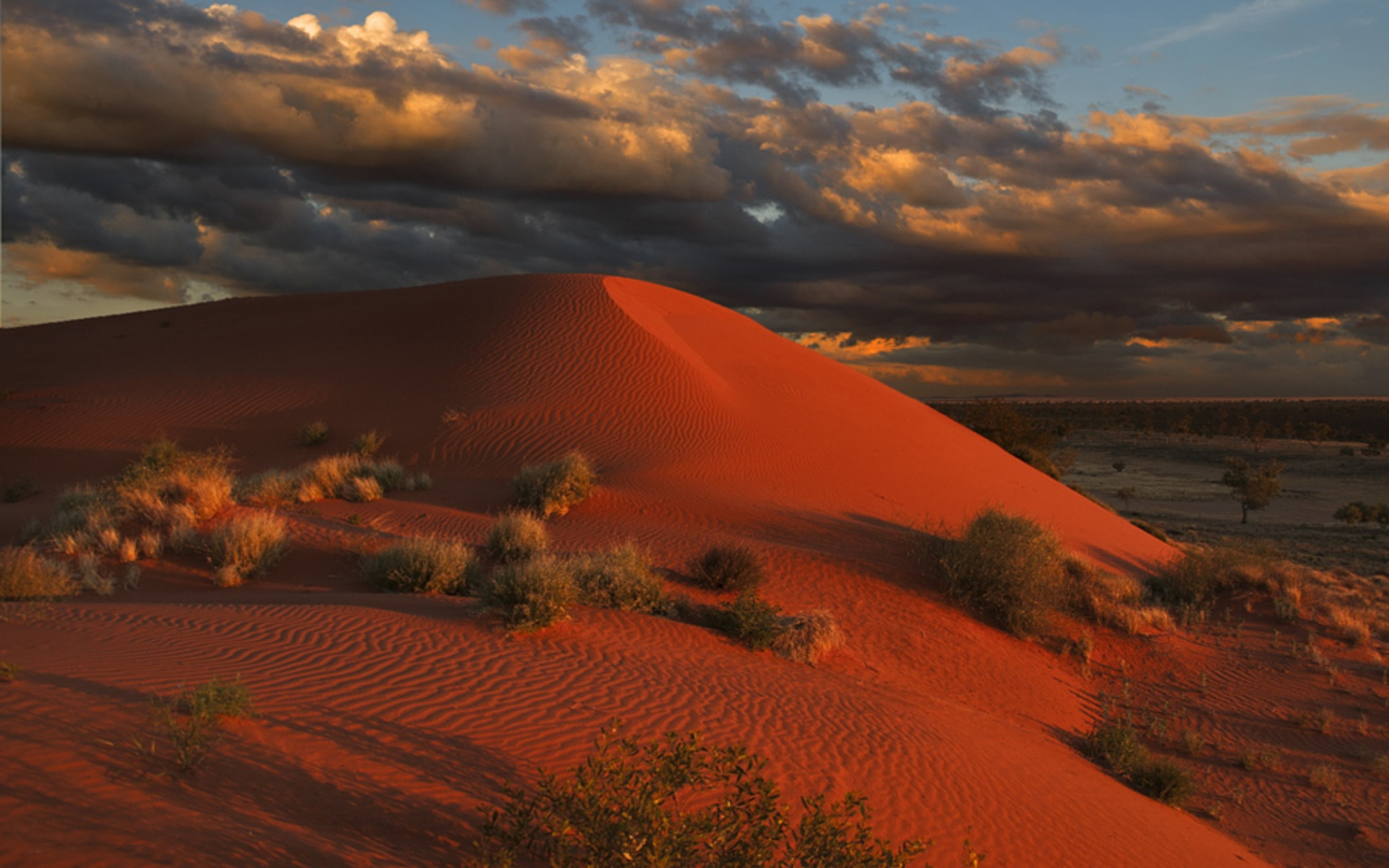 Desktop Wallpaper Fall Flowers Simpson Desert Large Area Of Dry Red Sandy Plain And