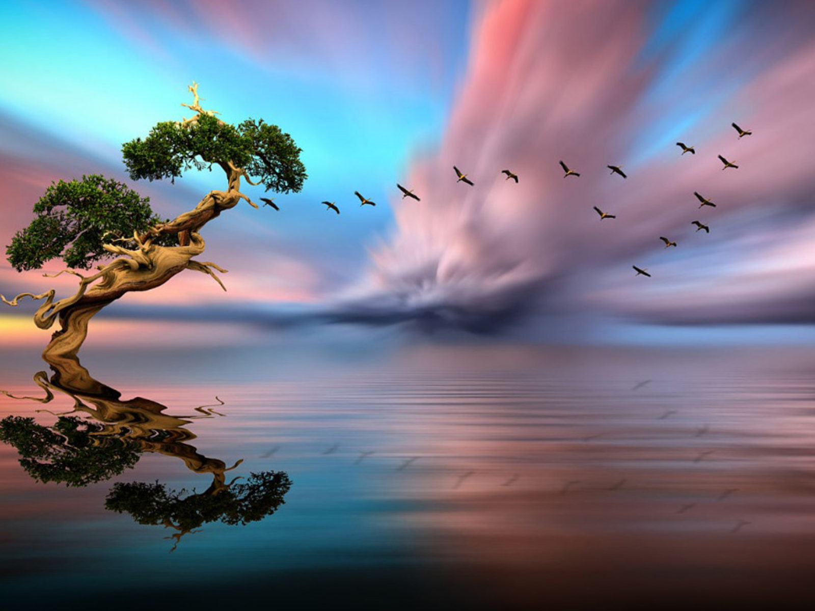 Pink Full Hd Wallpaper Solitary Tree Lake Birds In Flight Red Cloud Sunset