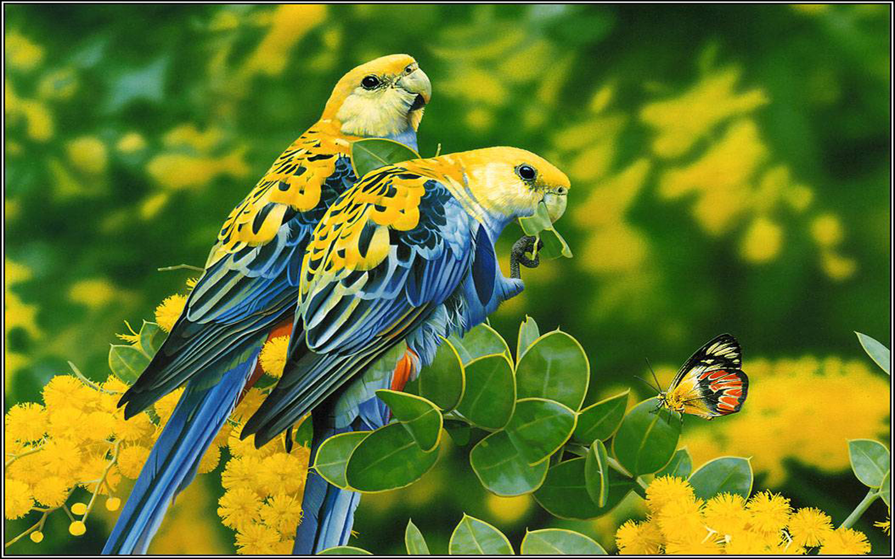 3d Wallpapers For Pc Full Screen Free Download Birds Blue Yellow Parrots Butterfly Tree With Yellow