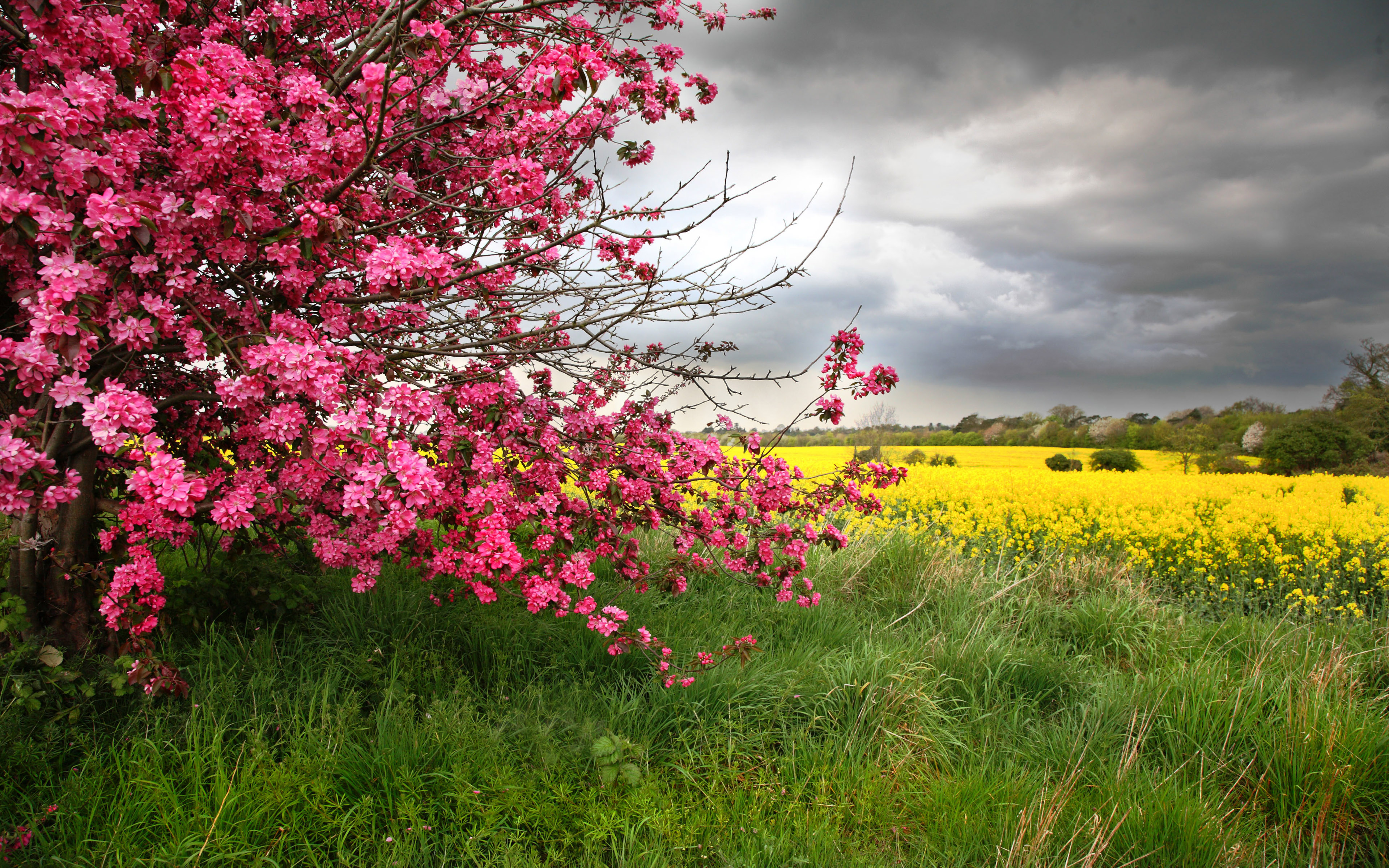 Fall Season Live Wallpaper For Android Color Spring Tree With Pink Flowers With Yellow Field