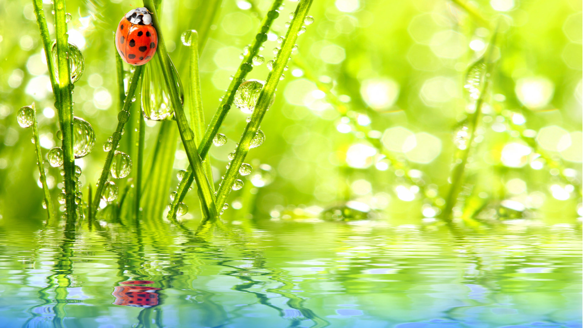 Happy New Year 3d Wallpaper Download Insect Ladybug Water Drops Dew Green Grass Reflection Sky