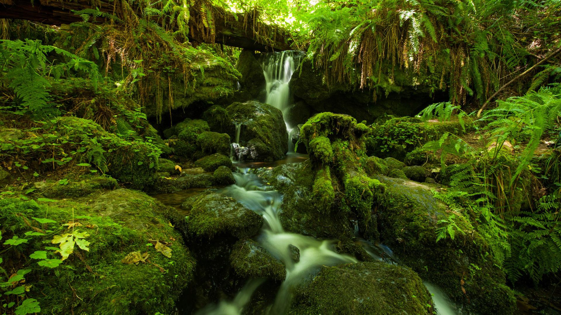 Havasu Falls Arizona Wallpaper Jungle Foliage Dense Vegetation And Mountainous River