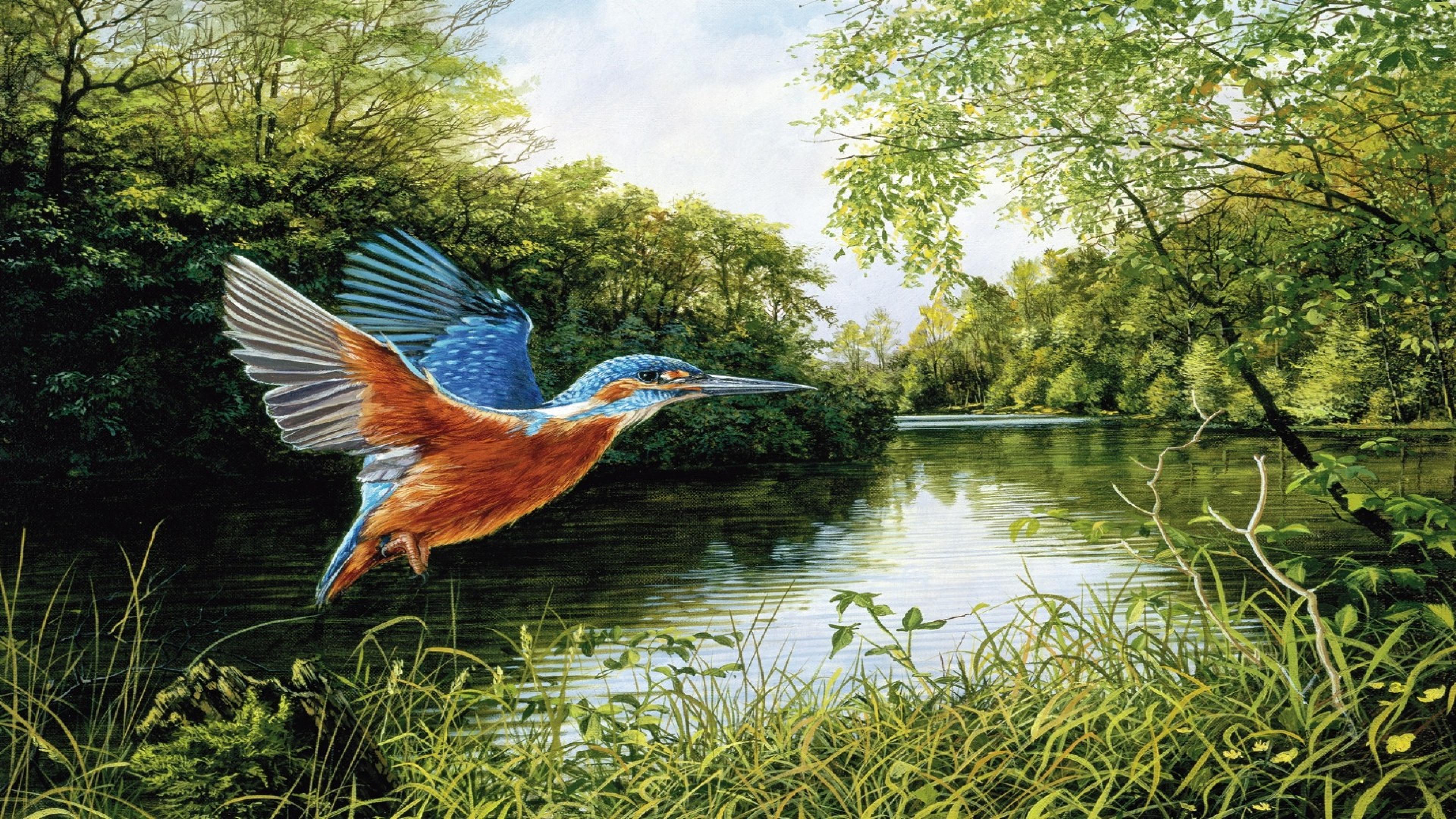 Desktop Wallpaper Hd 3d Full Screen 1080p Kingfisher Flight Green Trees Grass River Art On Canvas