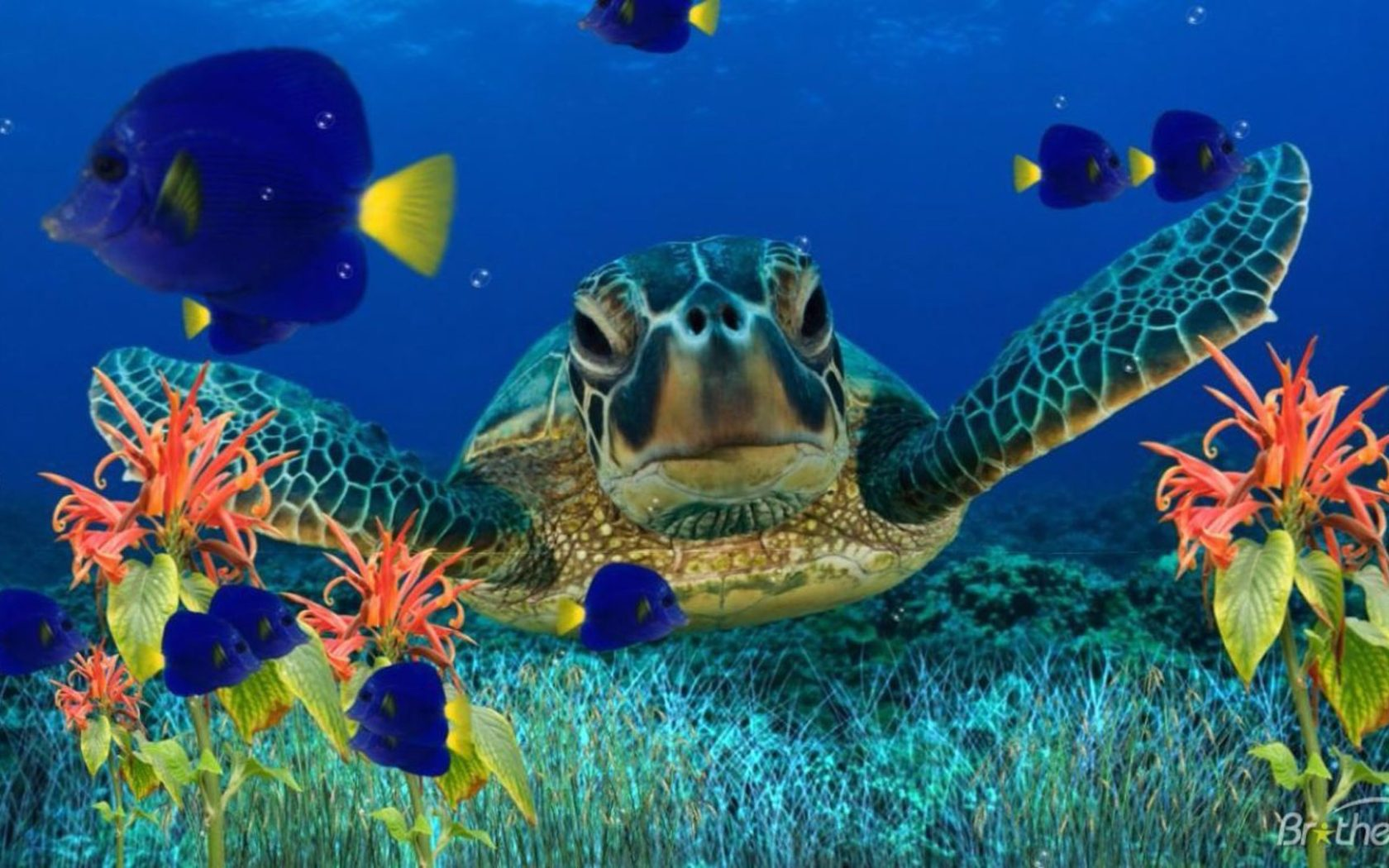 Animated Butterfly Wallpaper Sea Turtle Underwater Flora Fish Art Wallpaper Hd