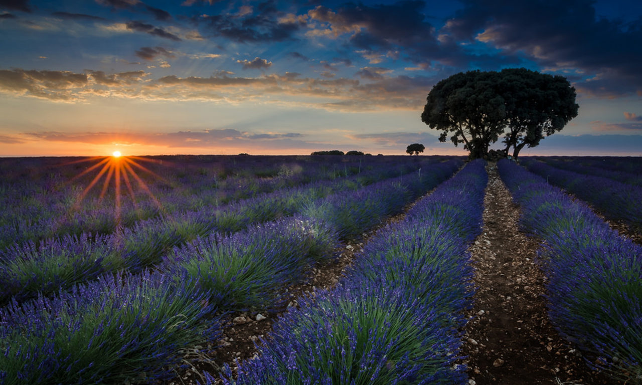 Amazing Wallpapers For Iphone X Sunset Fields With Lavender Brihuega Guadalajara Province