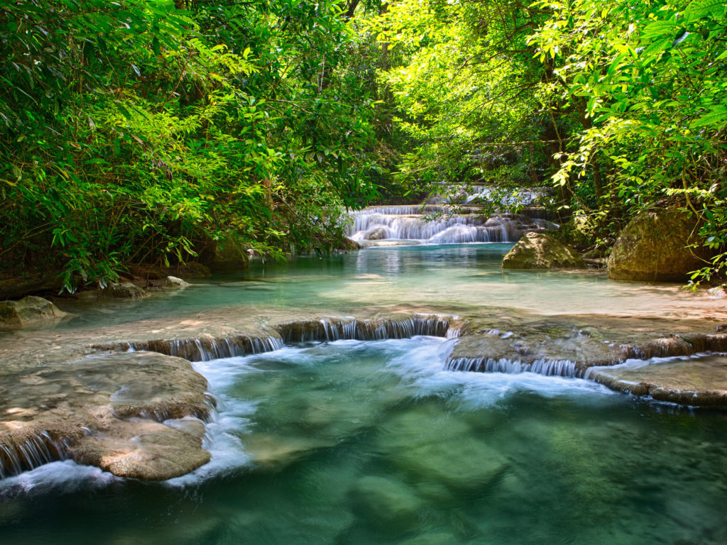 Jungle Wallpaper With Animals Thailand Tropical Vegetation Green River With Waterfalls
