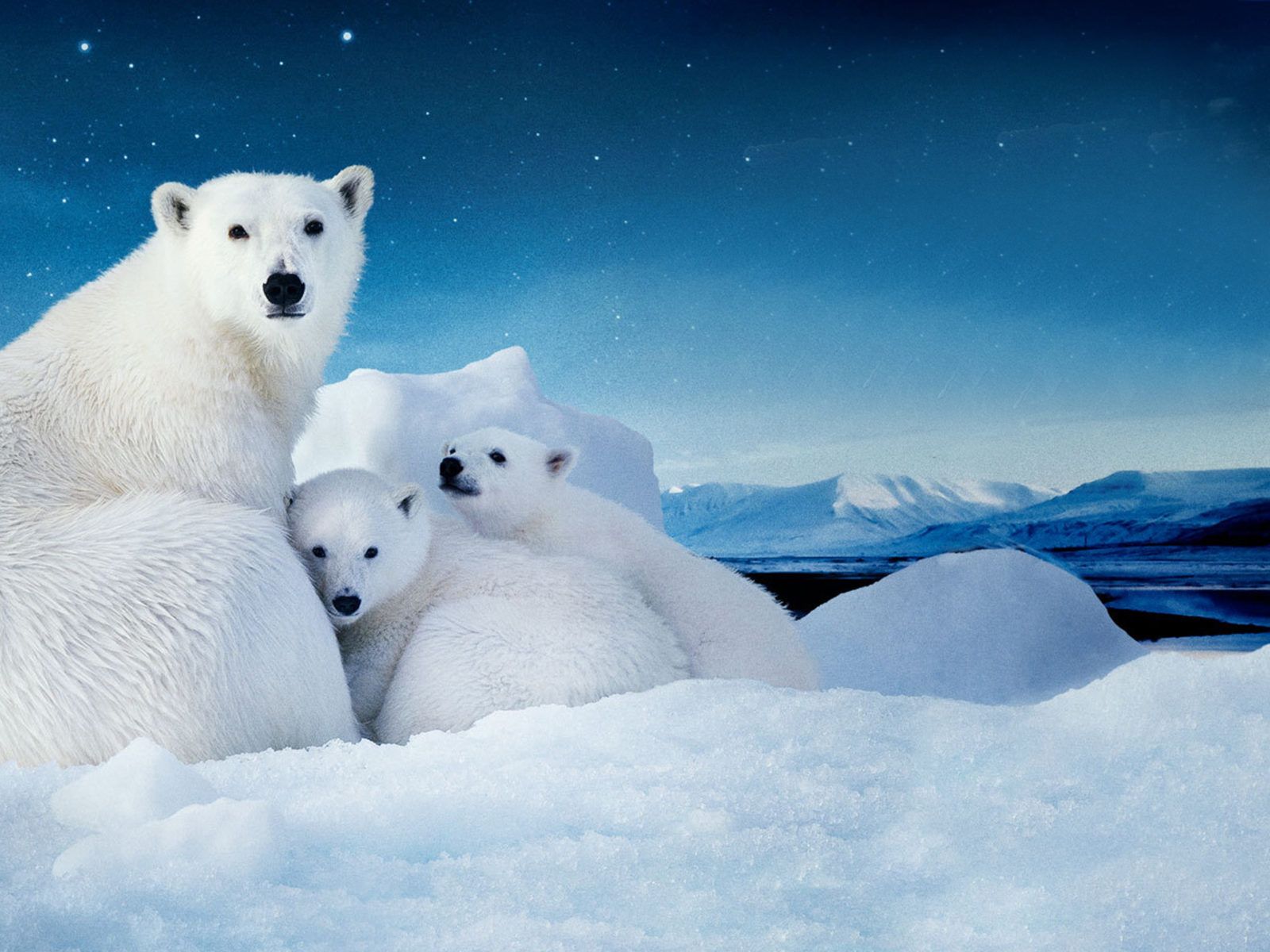 Cute Tiger Cubs Hd Wallpapers White Polar Bear With Two Cubs Small Desktop Wallpaper