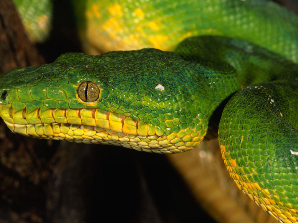 Download Cute Baby Wallpapers Free Yellow Green Snake Widescreen Hd Resolution 1920x1080