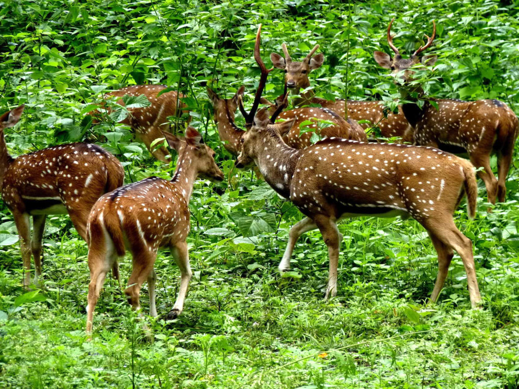 Cute Babies Hd Wallpapers 1366x768 Wild Animals Periyar National Park Is Located On The