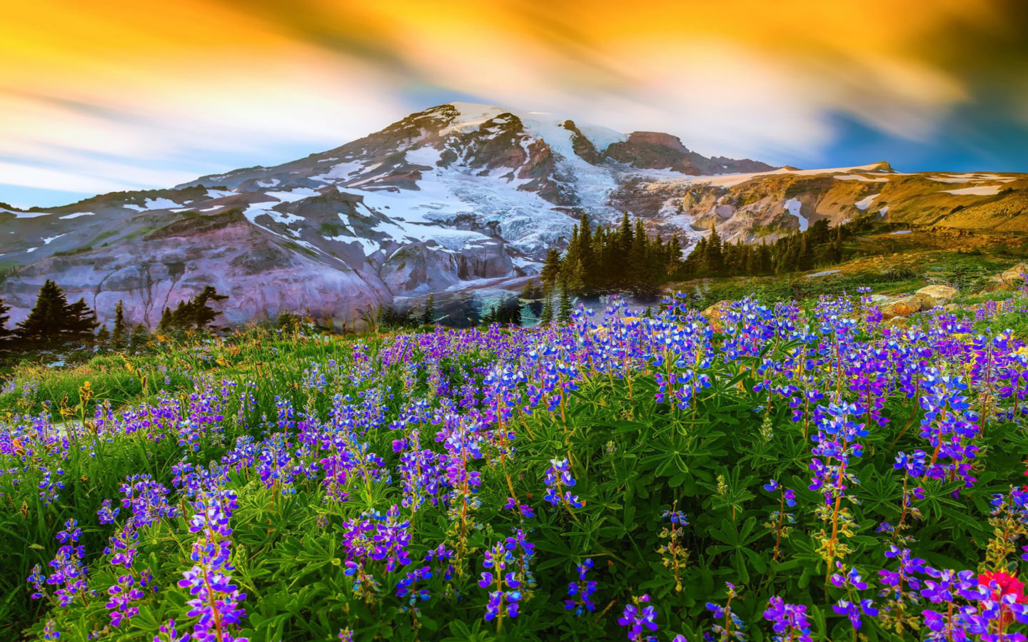 Fall Flowers Desk Background Wallpaper Beautiful Spring Landscape Nature Flowers Mountain Snow
