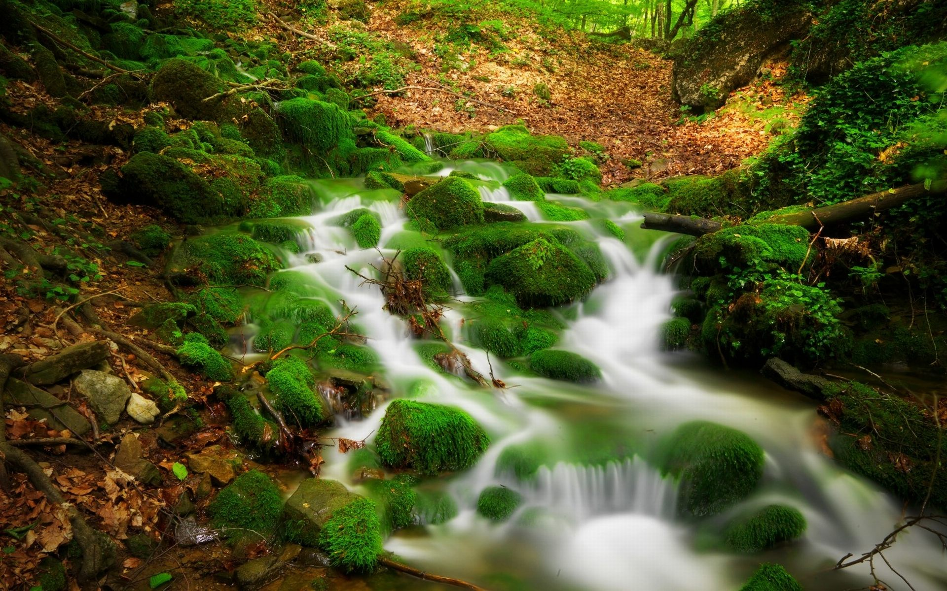 Fall Flowers Desk Background Wallpaper Forest Stream Clear Water Rock Covered With Green Moss
