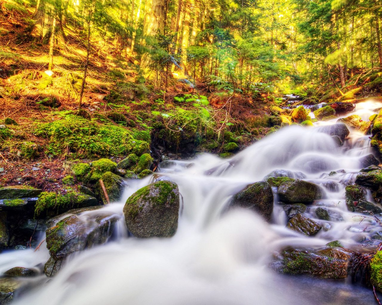 Fall Wallpaper Hd 1280x1024 Nature Landscape Canada Autumn Forest Stream Moss Stones