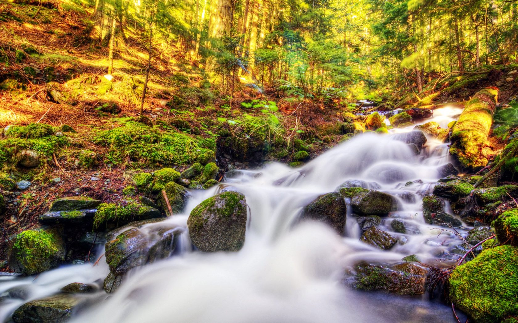 Fall Wallpaper And Screensavers For Free Nature Landscape Canada Autumn Forest Stream Moss Stones