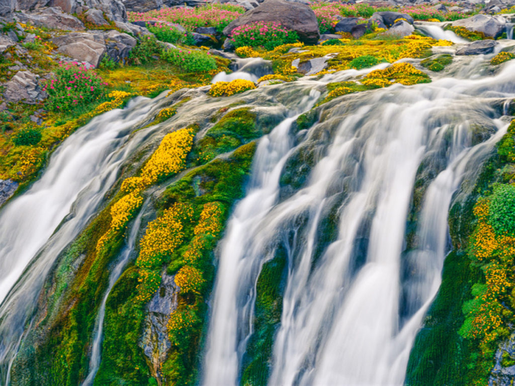 Free Christmas Falling Snow Wallpaper Waterfall In Spring Yellow And Pink Flowers In Mount