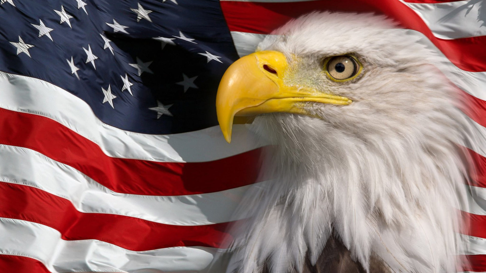 Free Fall Wallpaper For Iphone American Flag And Bald Eagle Symbol Of America Picture Hd