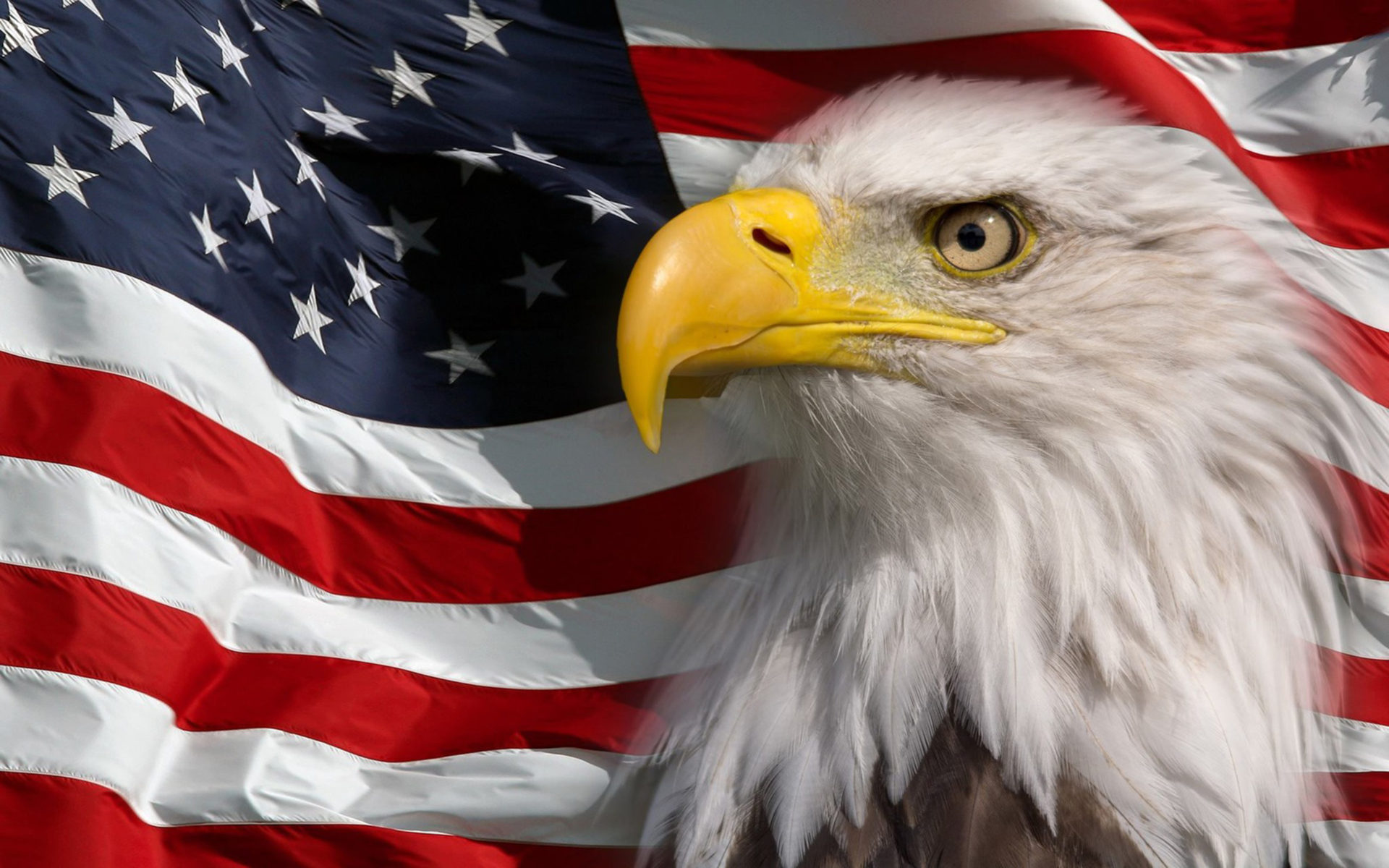 Beautiful Girl Hd Wallpaper For Pc American Flag And Bald Eagle Symbol Of America Picture Hd