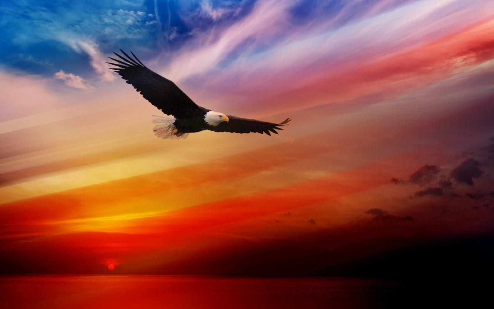 Flamingo Iphone Wallpaper Bald Eagle Flying At Sunset Red Sky Desktop Hd Wallpaper