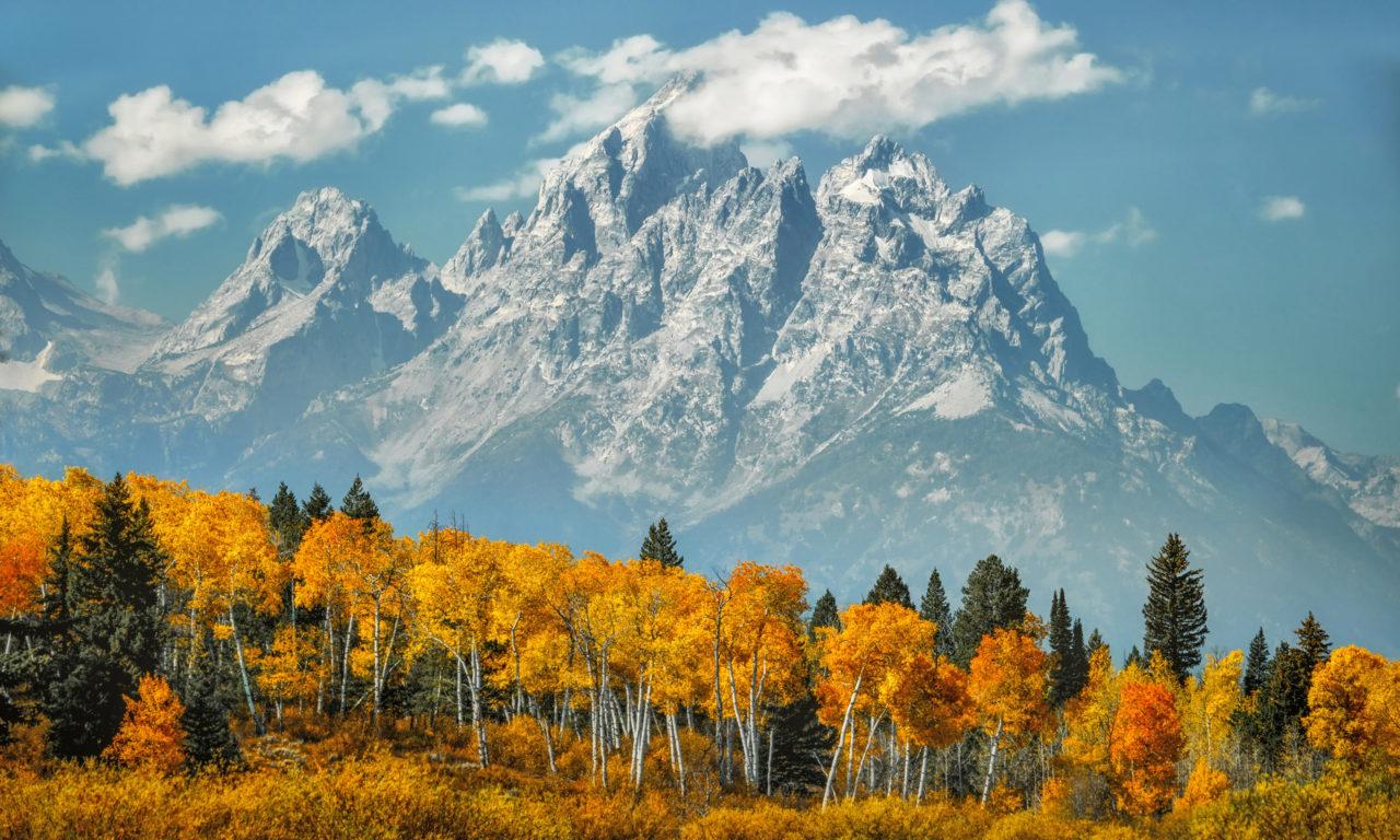 Fall Autumn Desktop Wallpaper Aspen Forest In Fall Colors Snow Mount Moran Mountain In