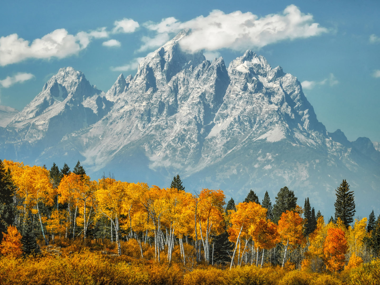 Beach Fall Wallpaper Aspen Forest In Fall Colors Snow Mount Moran Mountain In