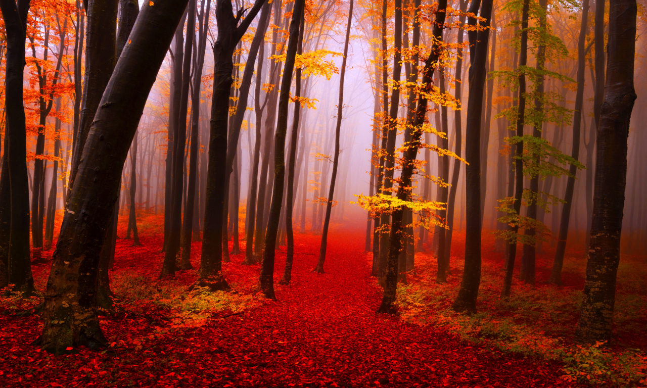 Fall Leaves Iphone 5 Wallpaper Autumn Forest Path Trees Fog Fall Yellow And Red Leaves