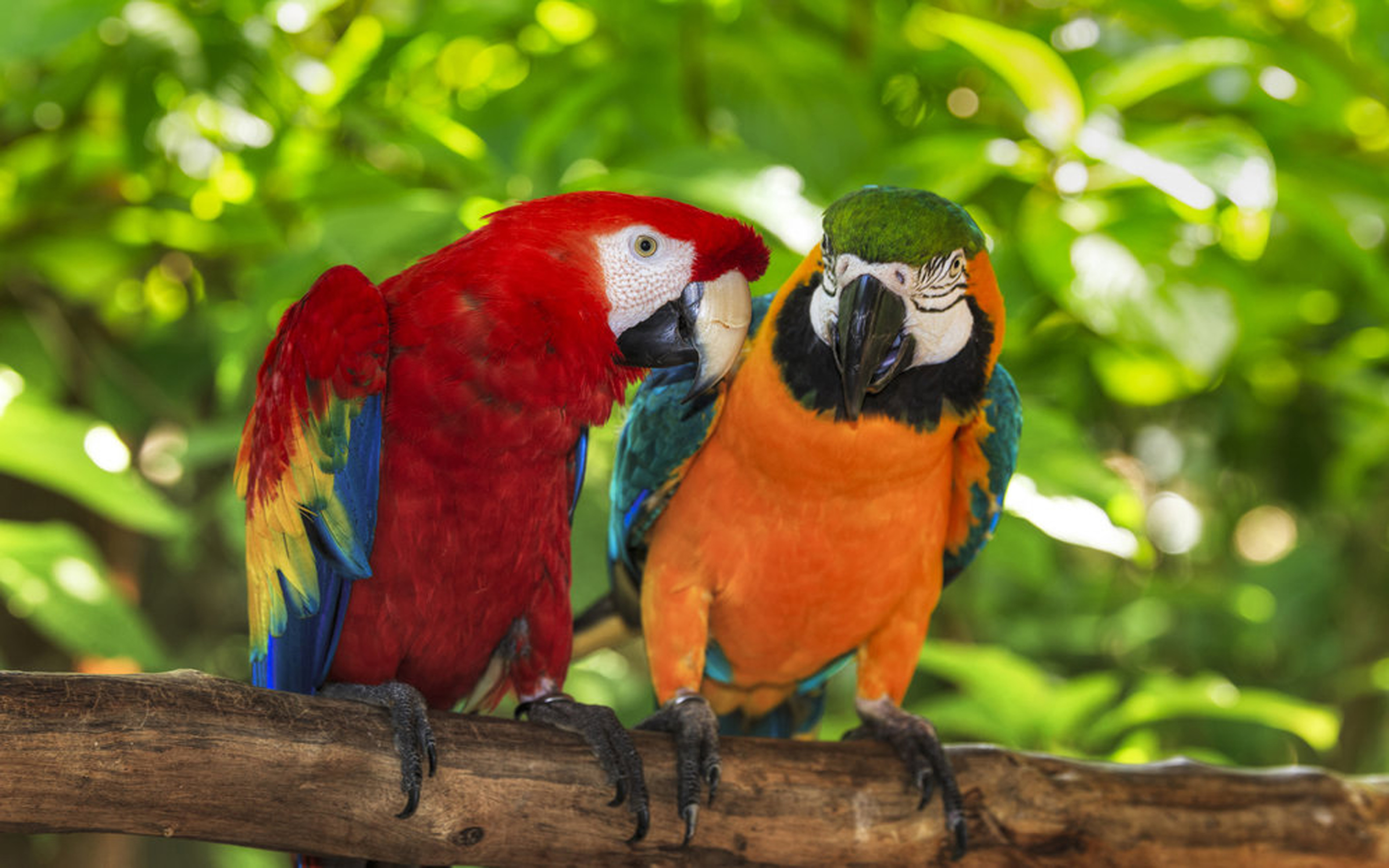 Hawk Iphone Wallpaper Pair Of Macaws Perching On A Branch Wallpapers13 Com