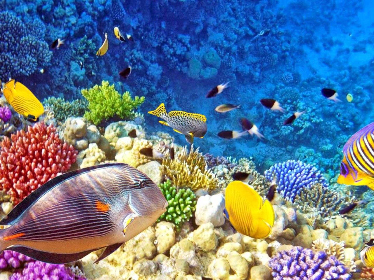 Hawaii Desktop Wallpaper Hd Raja Ampat Underwater Photo Tropical Colorful Fish Coral