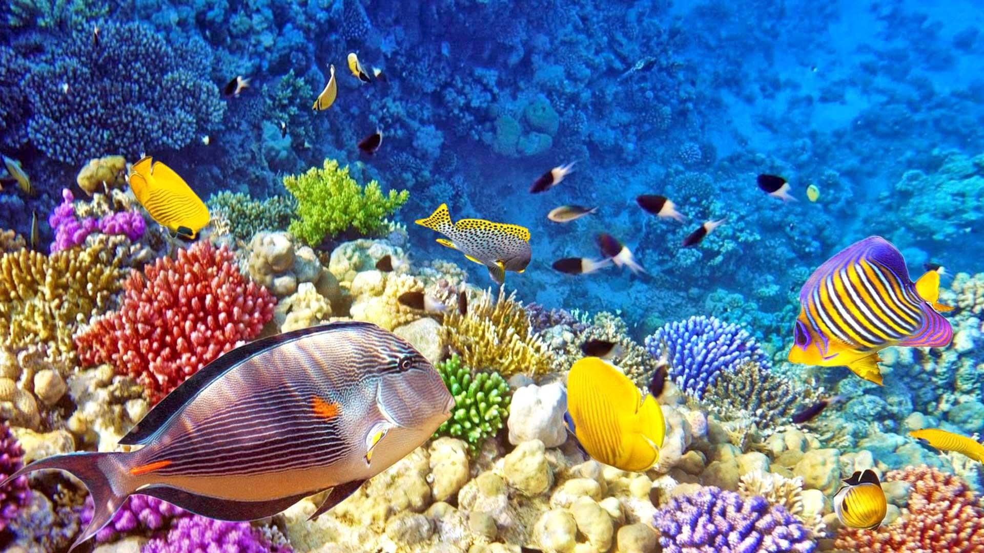 Iphone X Wallpaper 4k Live Raja Ampat Underwater Photo Tropical Colorful Fish Coral